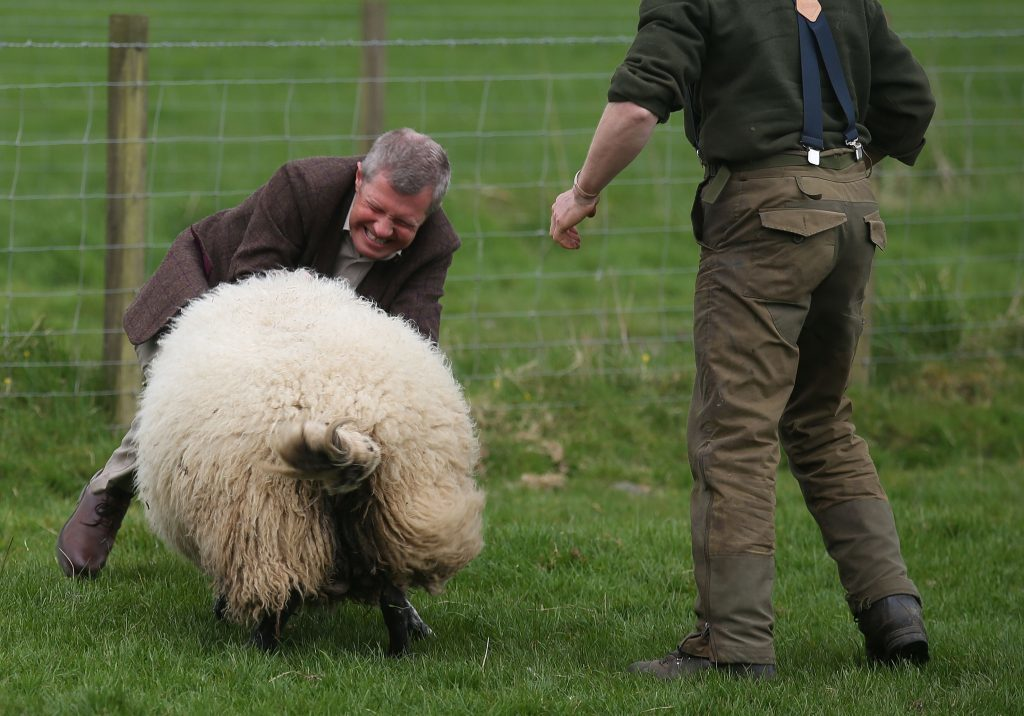 Willie Rennie learns not to pull the wool over voters' eyes.