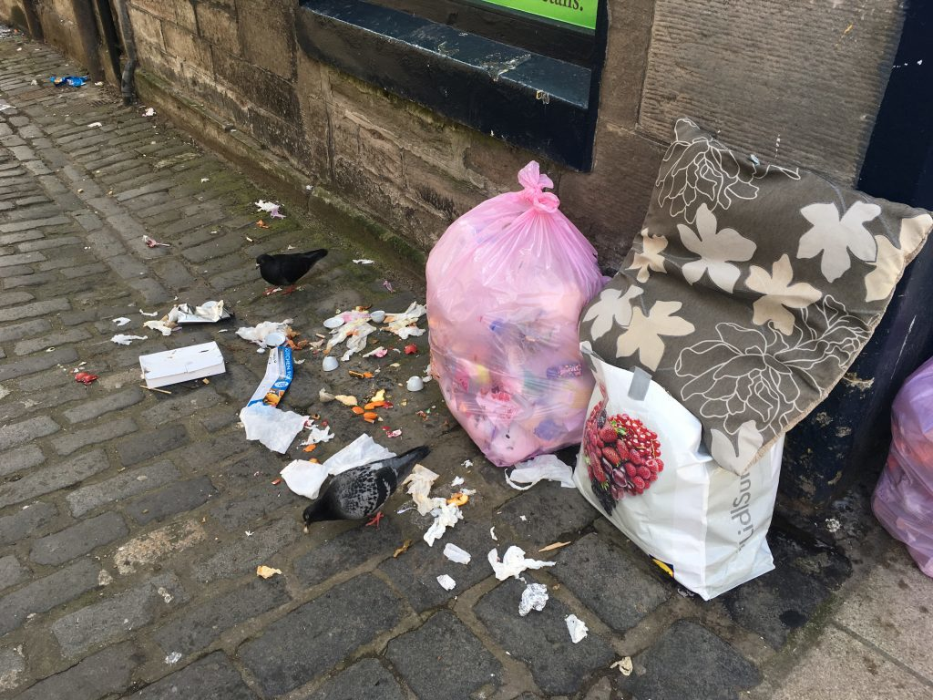 Pigeons feasting on the contents of rubbish sacks left out, near George Street.