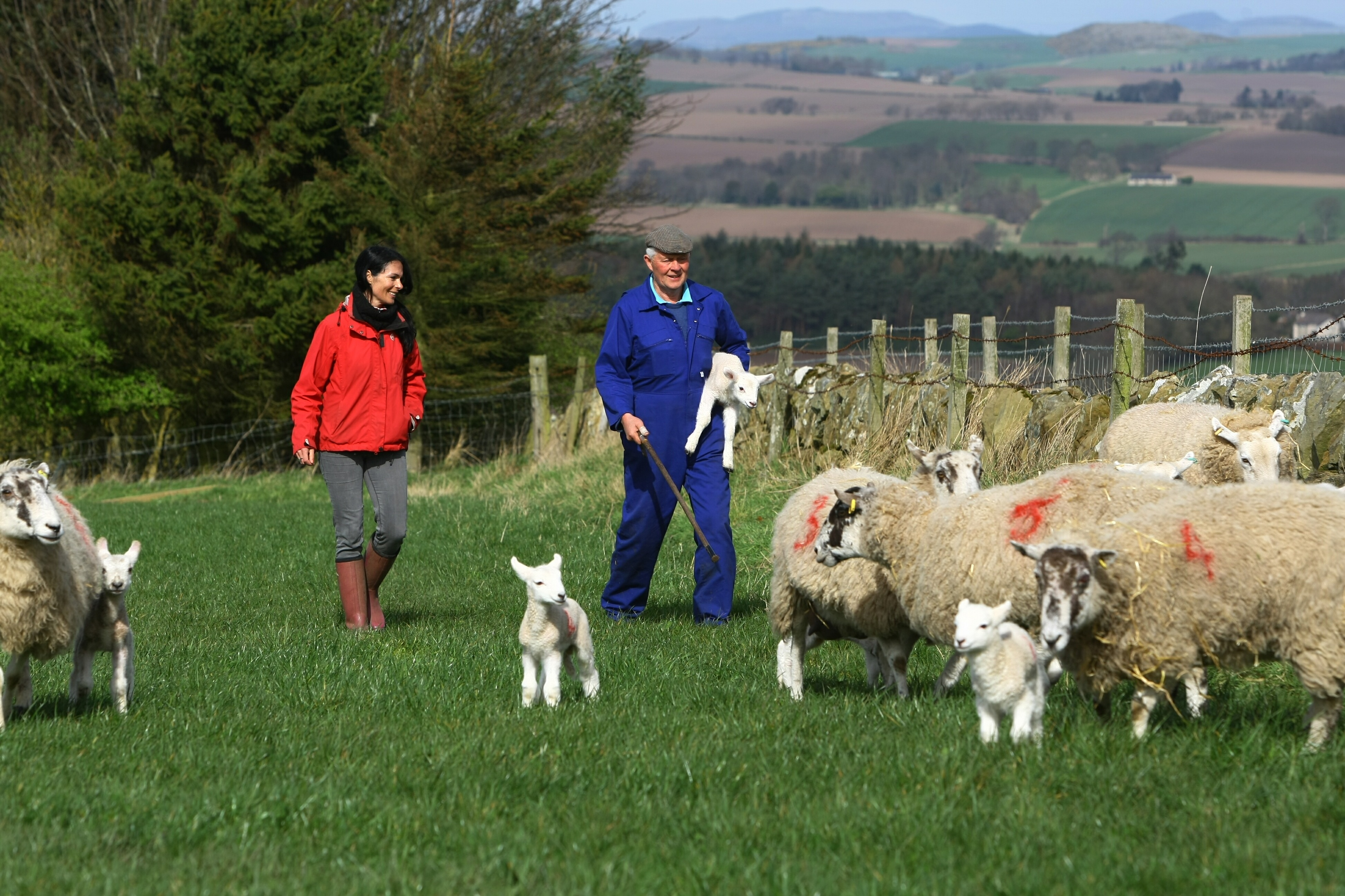 Gayle with farmer Ian Whiteford and some of the lambs and ewes in one of the fields at Hilltarvit Mains Farm near Cupar.