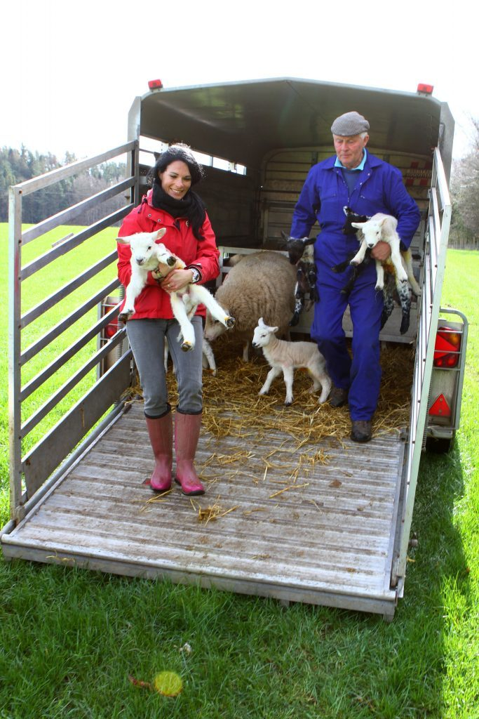 Gayle helps get a lamb into a field.