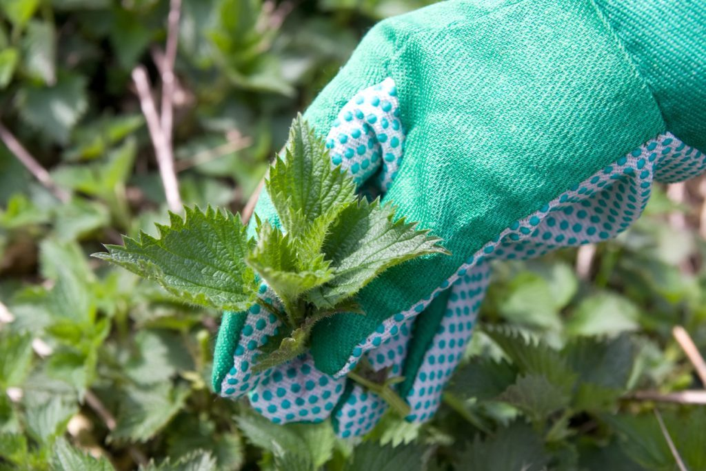 nettle and hand in gloves