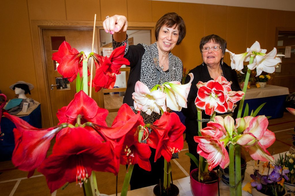 Linda Retson and Ursula Stewart (Vice-Chairman of Perth & Kinross Federation) - the pair are looking at the One Amaryllis Bulb section.
