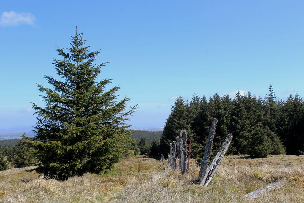 3 - Clear ground above the treeline on Innerdouny Hill - James Carron