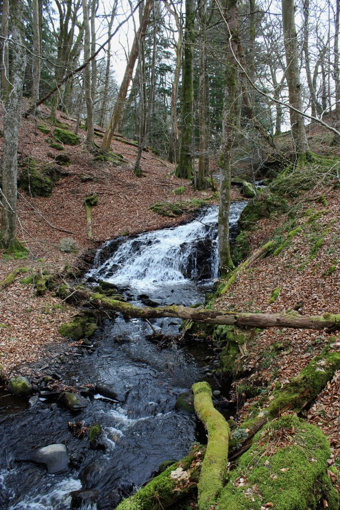 4 - Stream running through Byres of Murthly - James Carron, Take a Hike