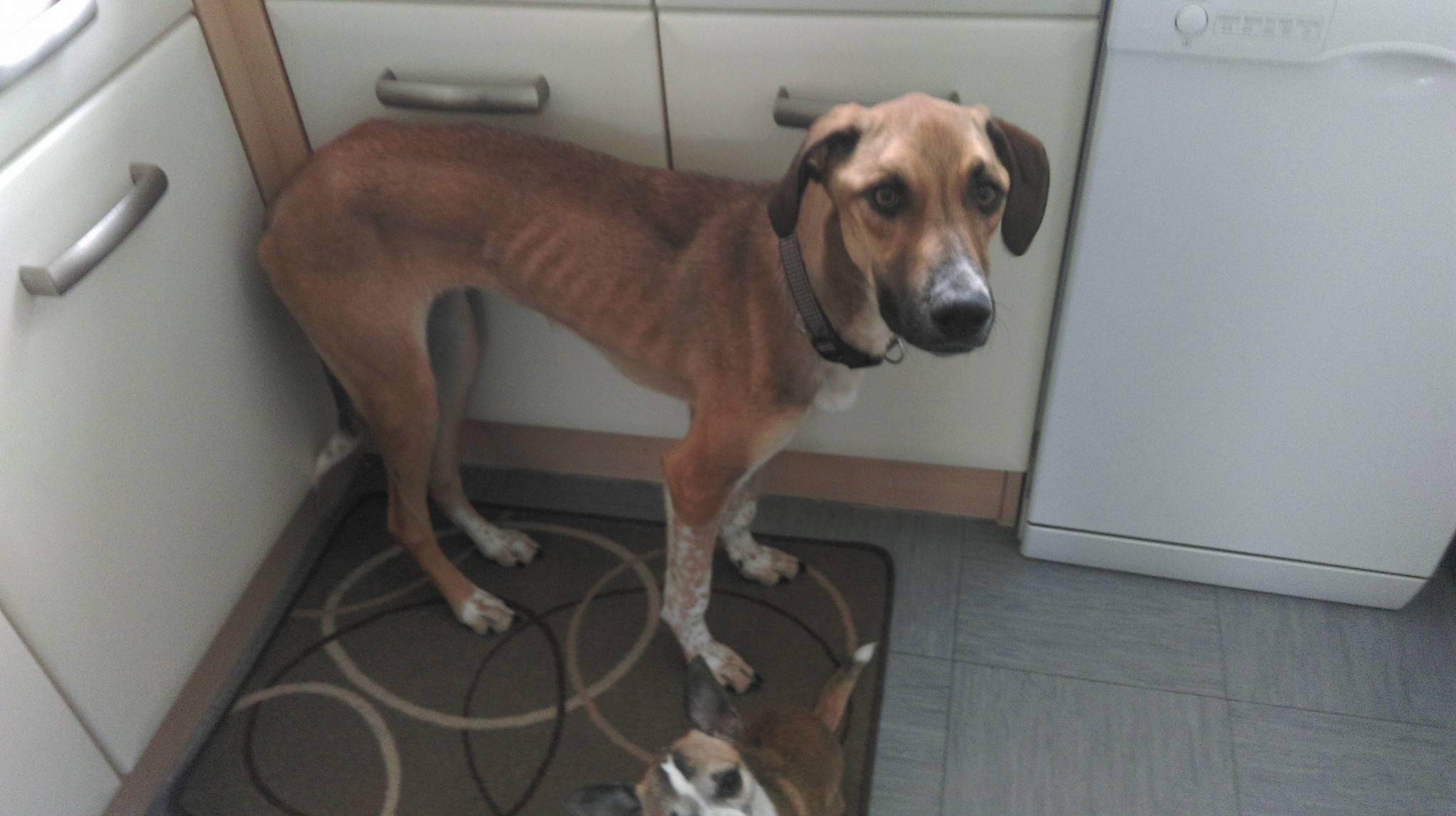 Lucy has become severely underweight due to losing her appetite as a result of her illness.