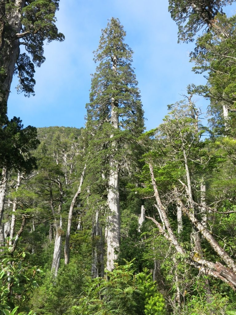 The team spent time in Chile's stunning Fundo Lenca forest.