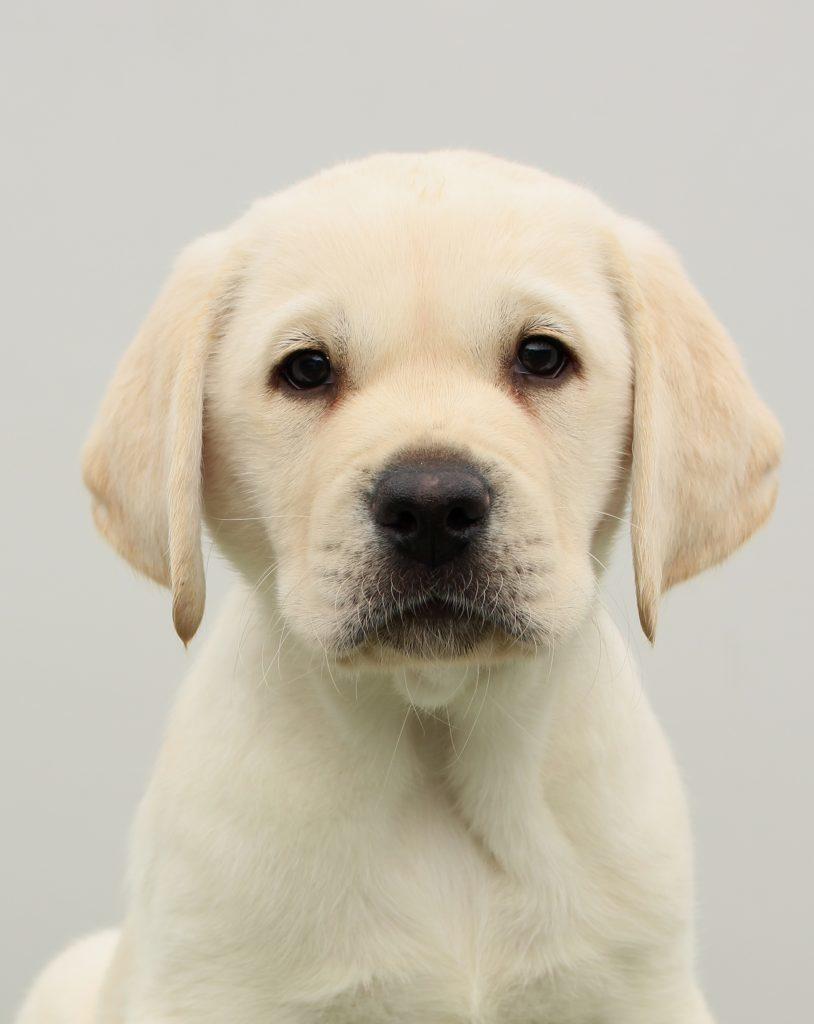 Innes, the pup named after volunteer Tom Innes