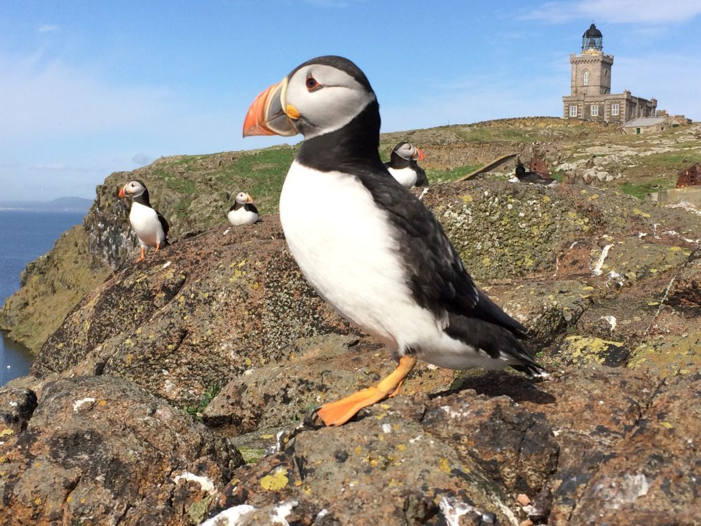 RSPB Scotland is concerned for puffin colonies and other bird life in the vicinity of the proposed arrays