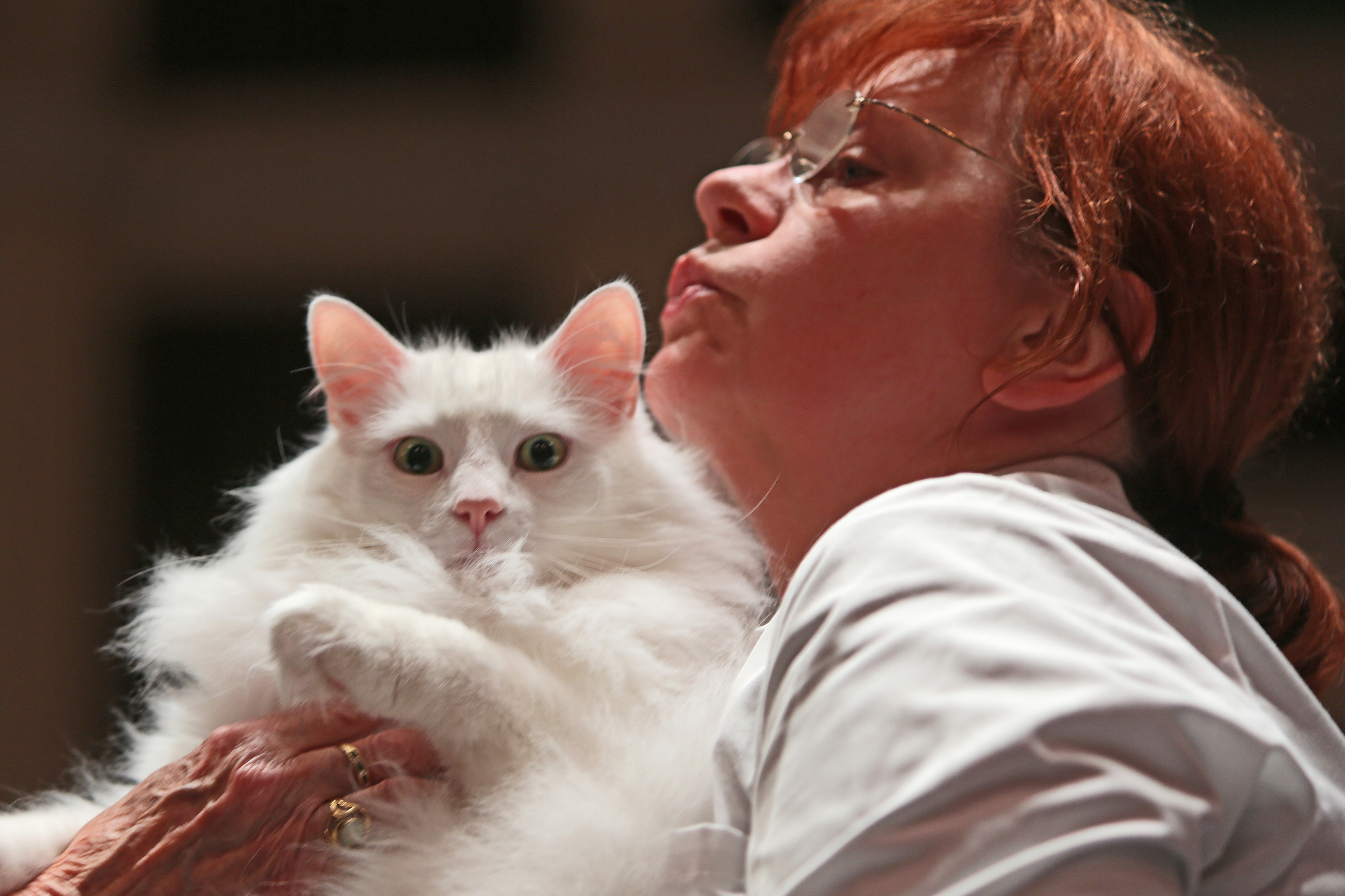The Nor' East Scotland Championship Cat shows was held in Caird Hall, Dundee.