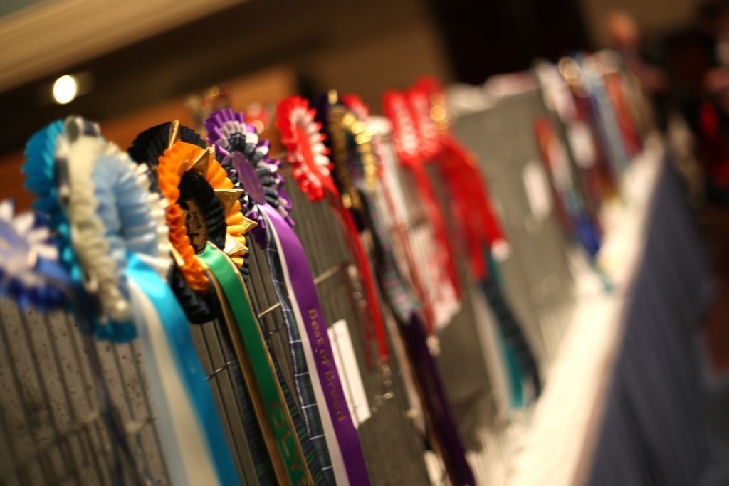Medals on offer at the Dundee Championship Cat Show.