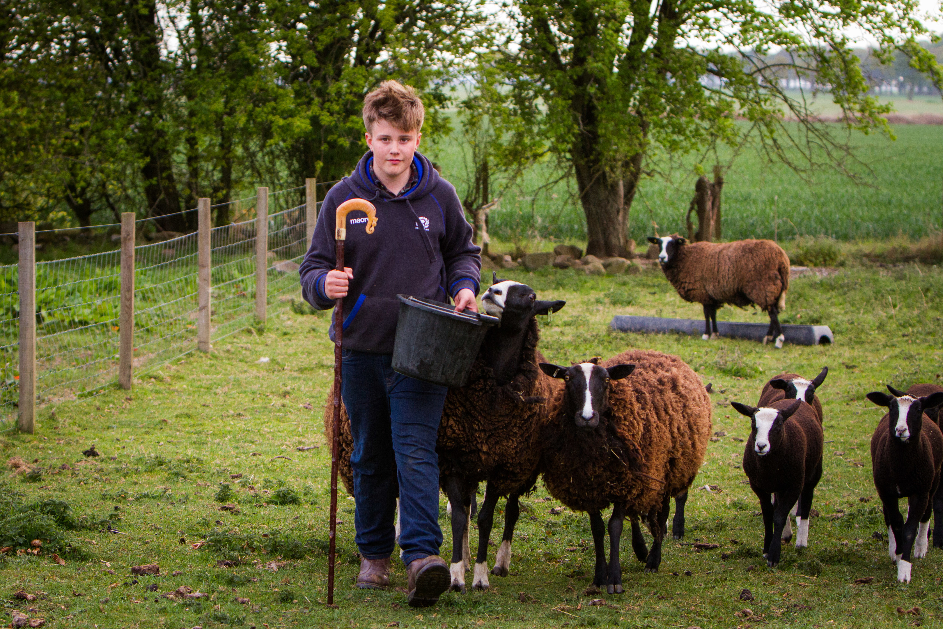Archie Downie, 14, with his flock. They were the target of two dog attacks in just 36 hours.