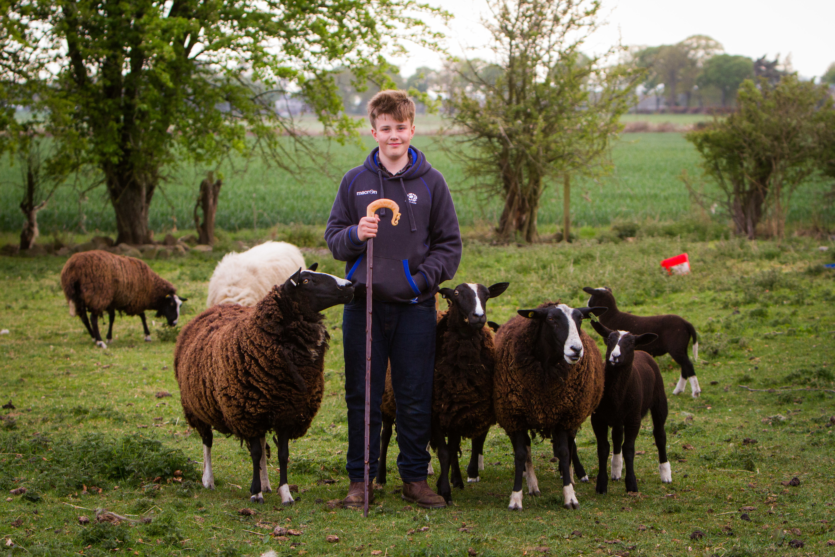 Young farmer Archie Downie had his pedigree flock of sheep attacked by a dog, twice.