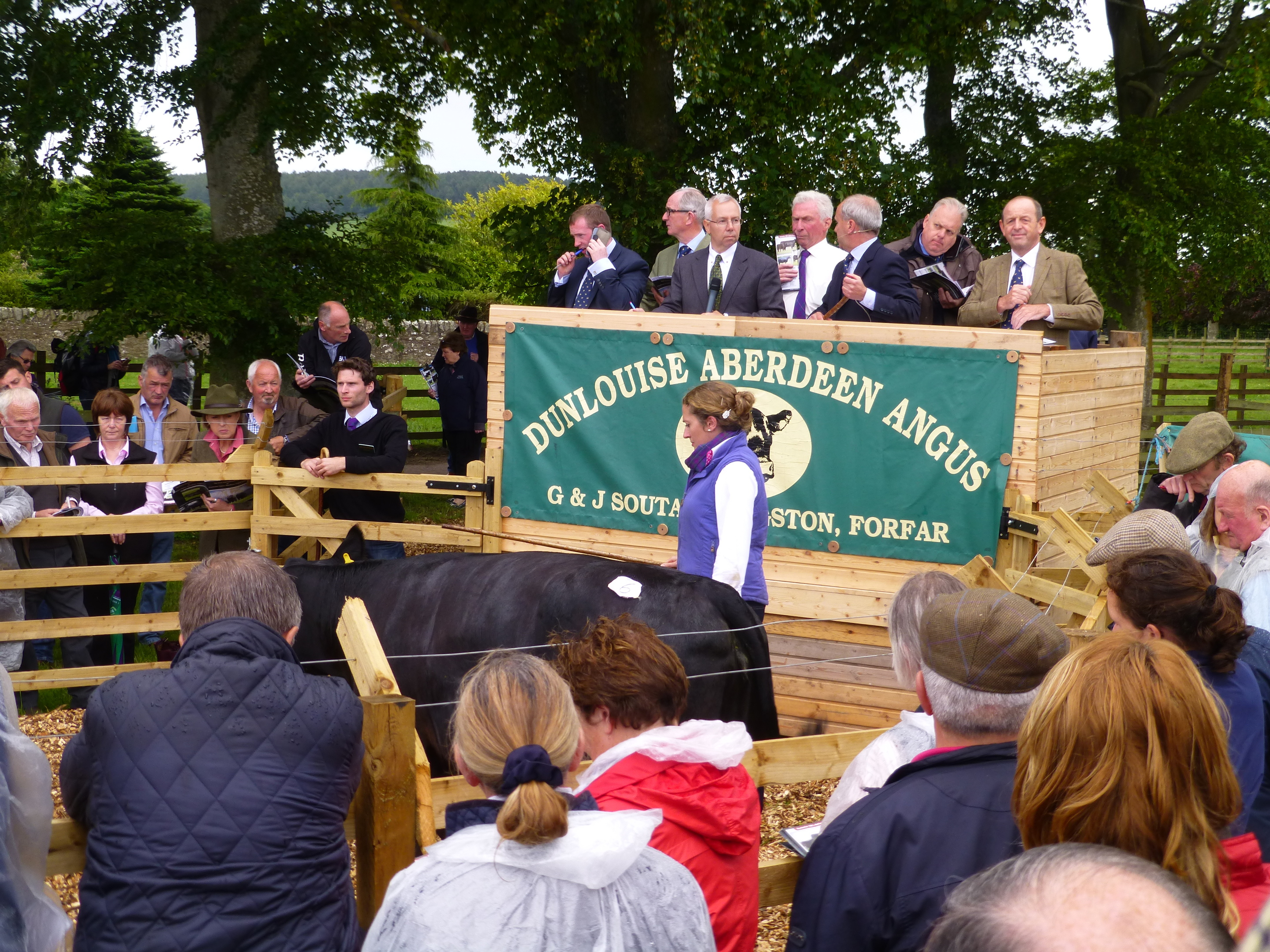 Hundreds of Angus enthusiasts gathered round a sale ring on the farm