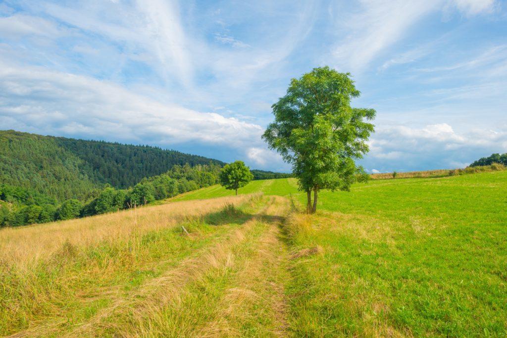 Hills of the Eifel National Park in summer.