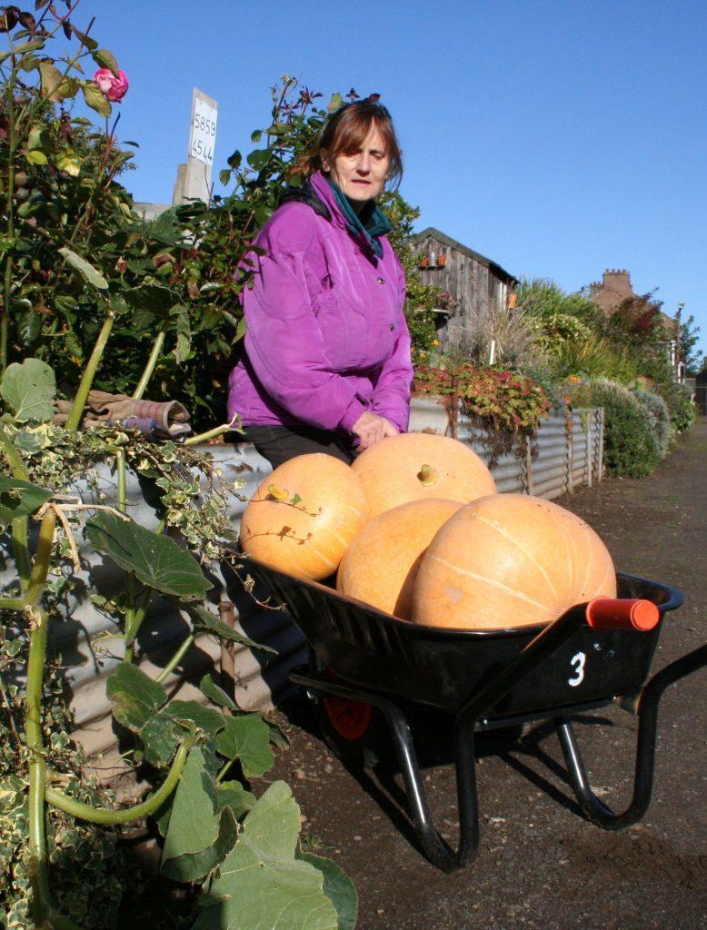 Anna brings in the pumpkin harvest