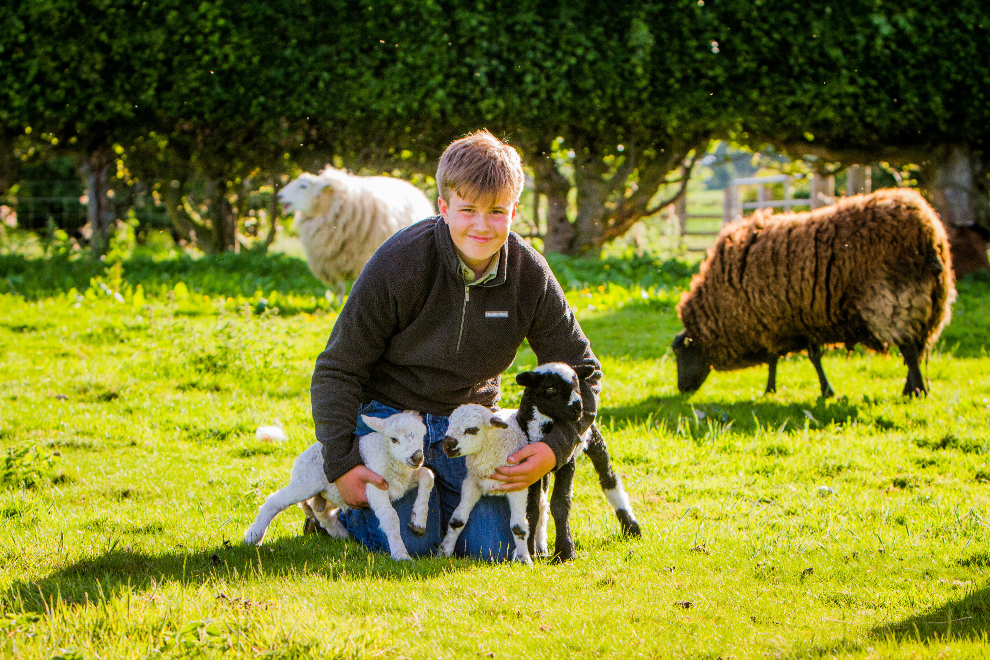 Archie with three of his new lambs.