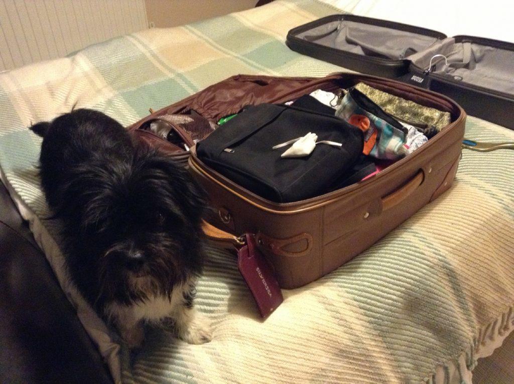 Bridget's dog Minnie.