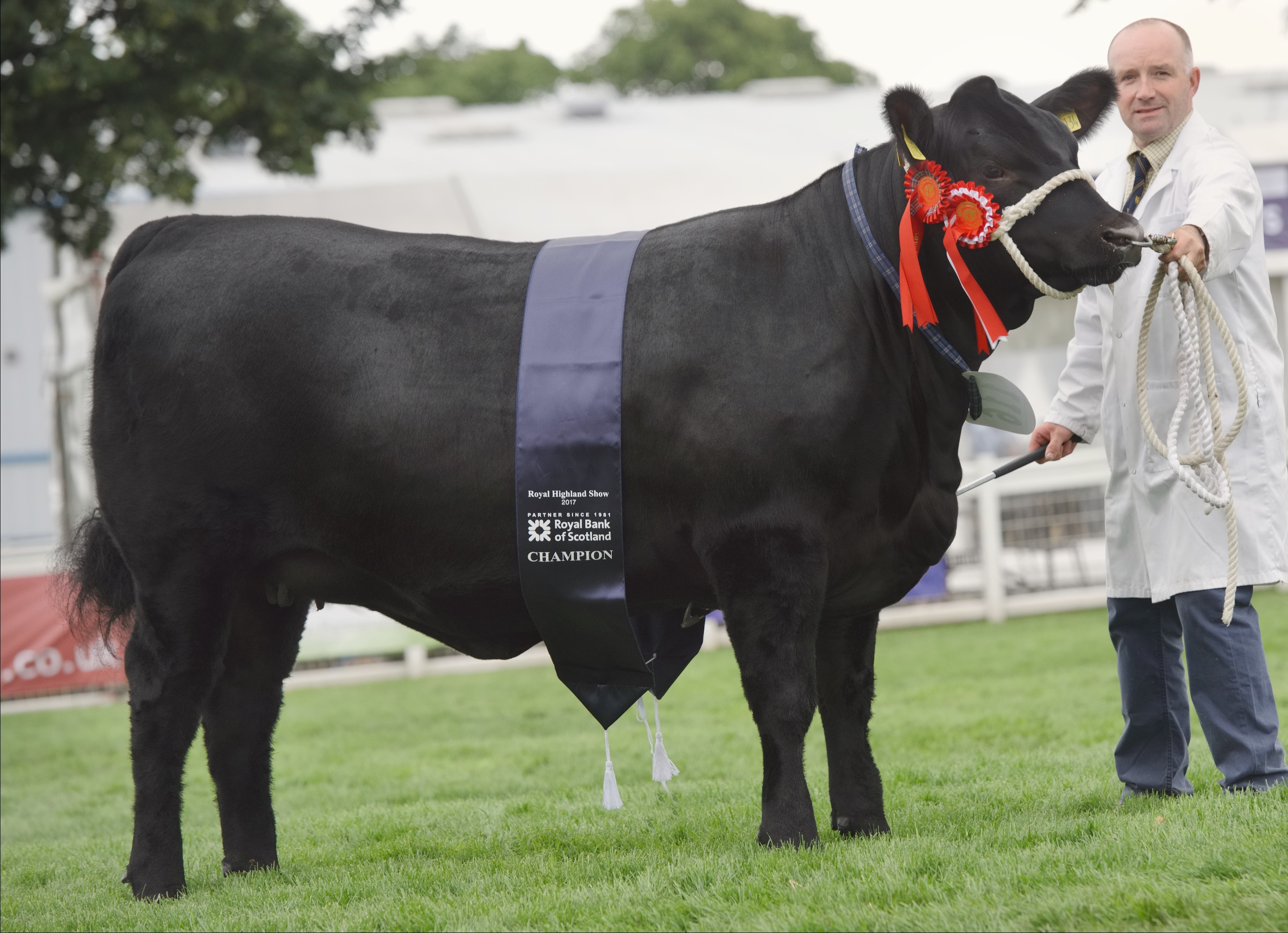 The Aberdeen-Angus entry at the Highland Show was the biggest for many years