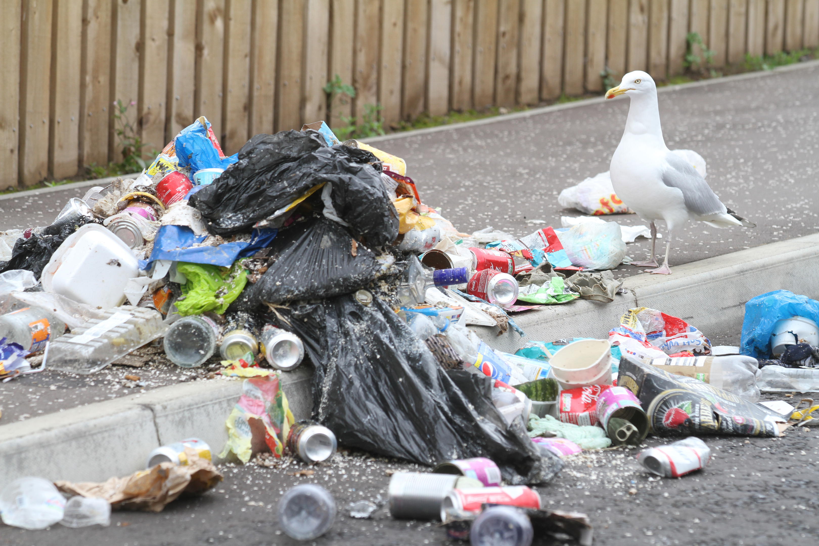 Communities in Angus are going to war on litter.