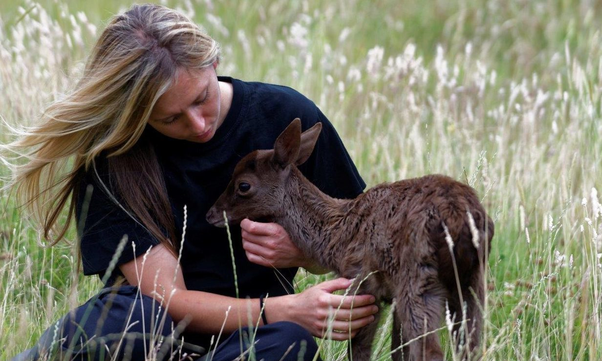 The Scottish SPCA's Head of Large Mammals Sheelagh McAllister with the weak fawn