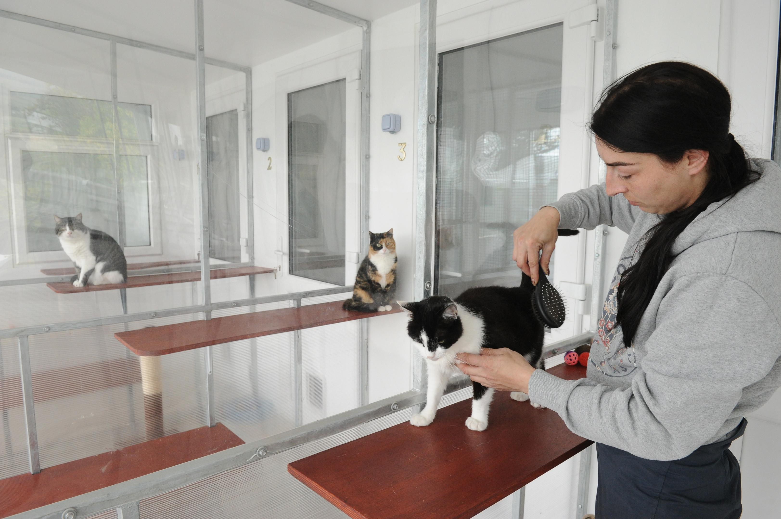 Cattery manager Emma Dick brushing down Daisy.