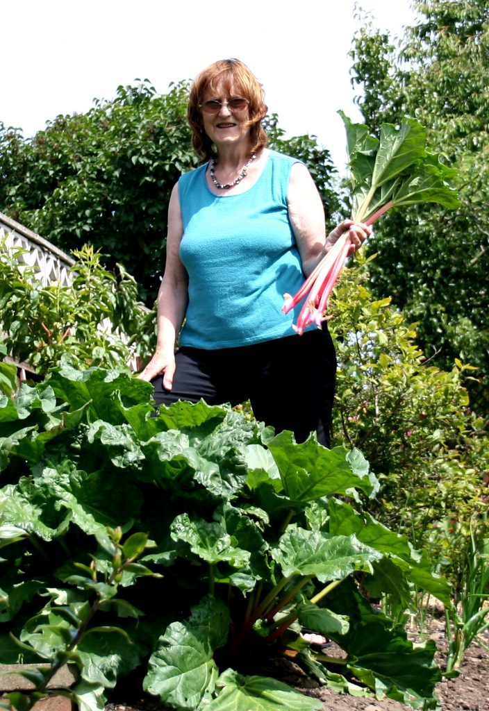 Picking fresh rhubarb
