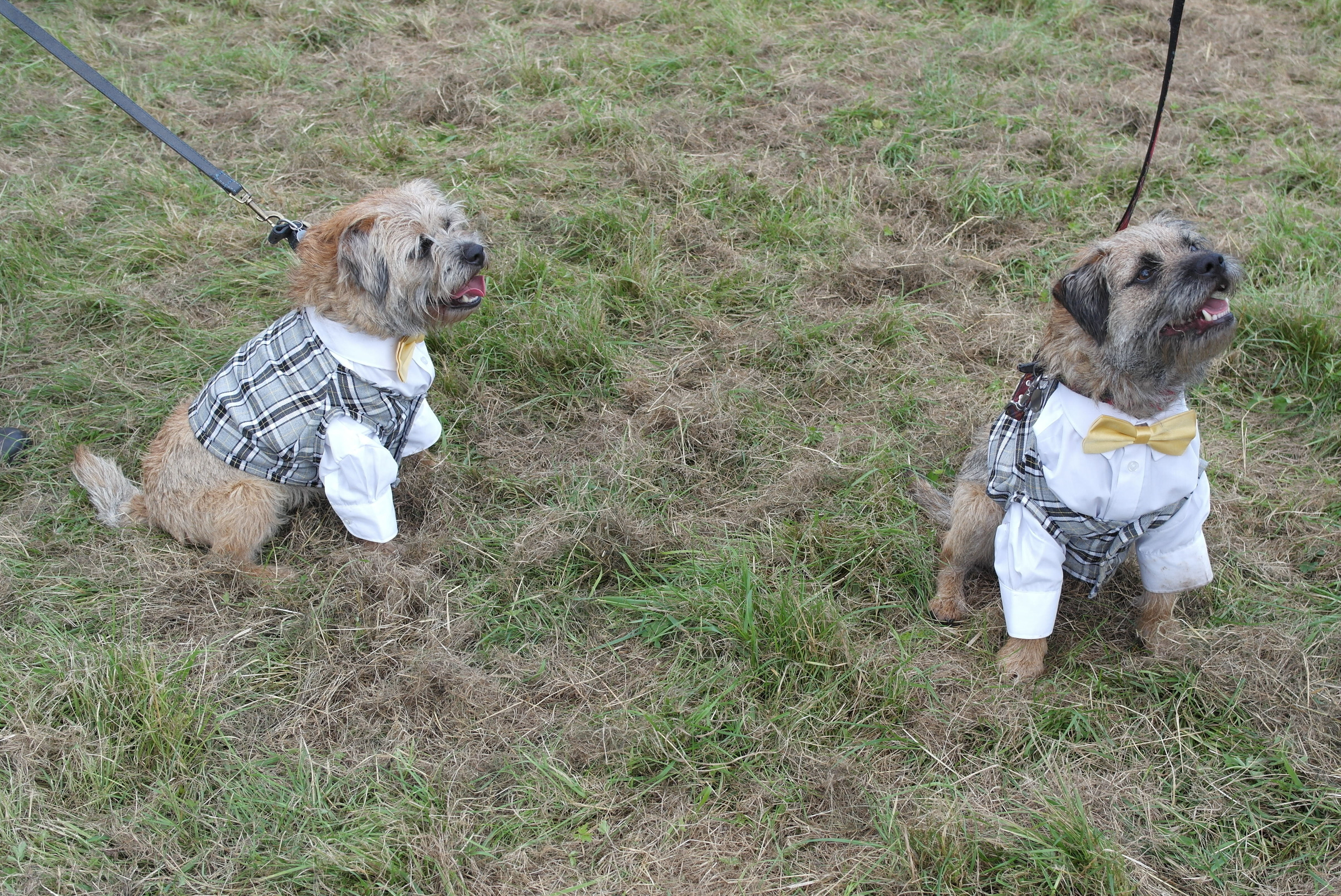 Some of the pooches in bandanas that took part in last year's dog event.
