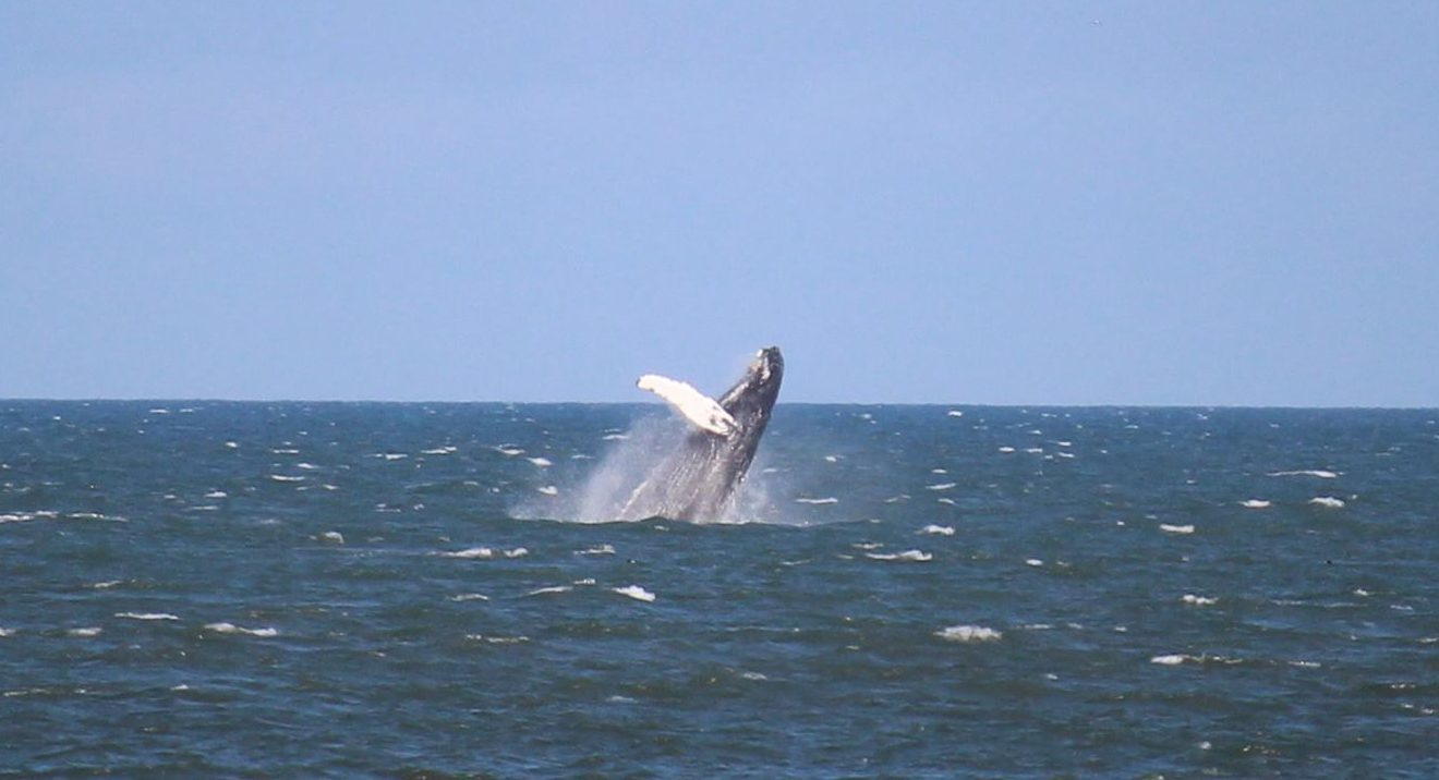 A whale near St Cyrus.