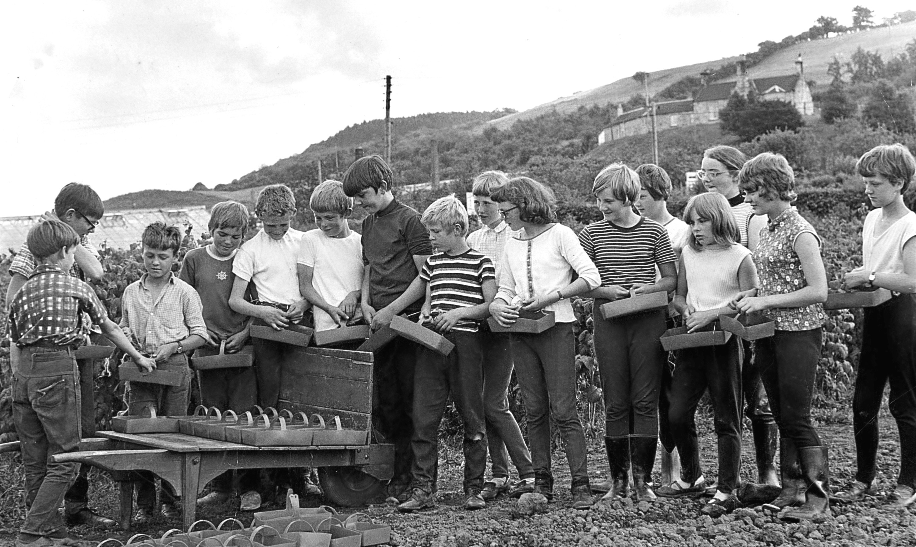 Young raspberry pickers hard at work in the summer of 1969.