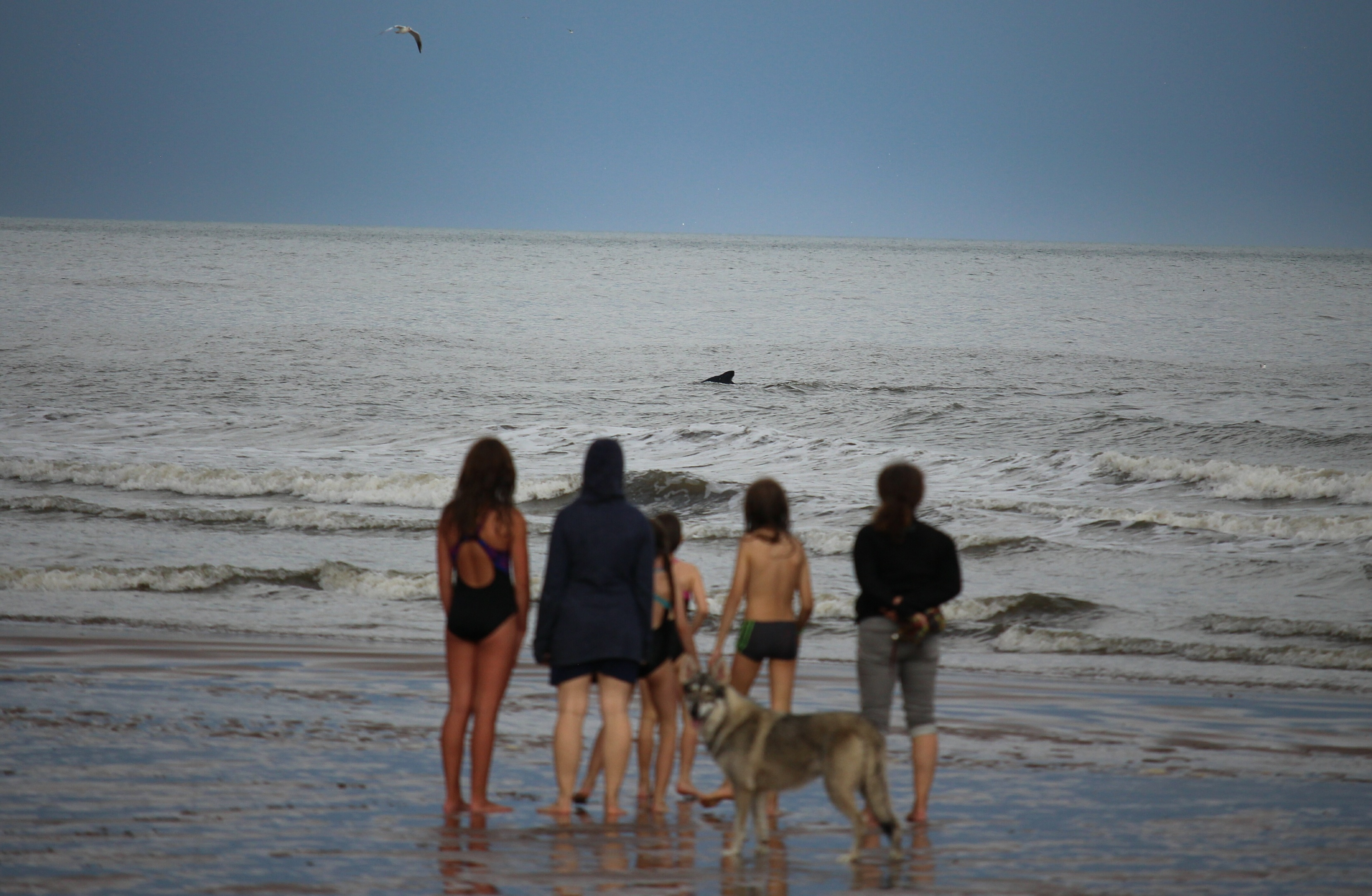 Some German tourists looking at the whale at St Cyrus.