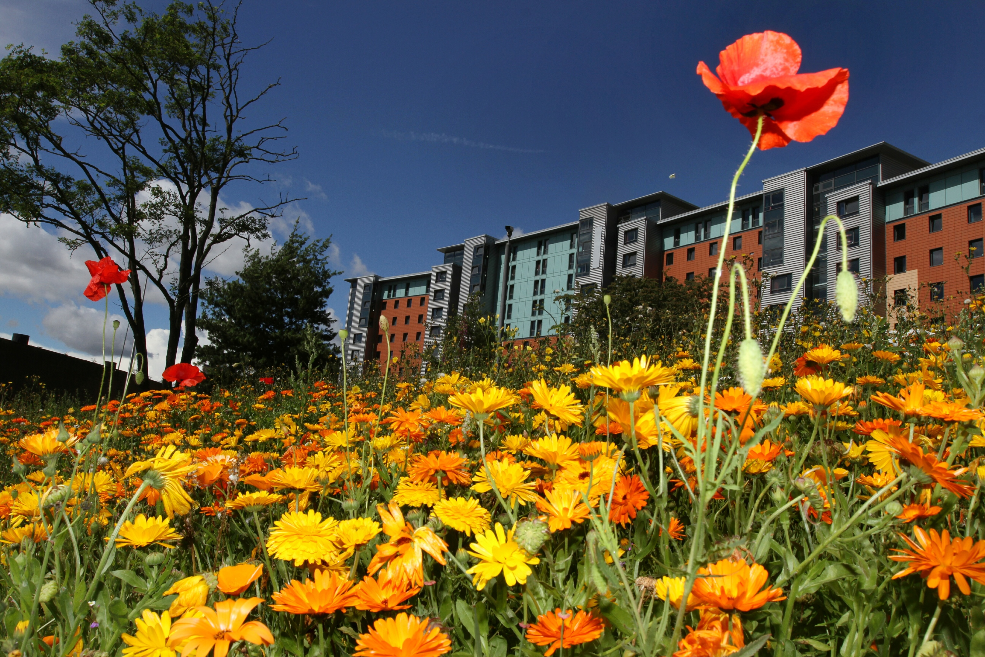 Flowers planted at the Dudhope roundabout.