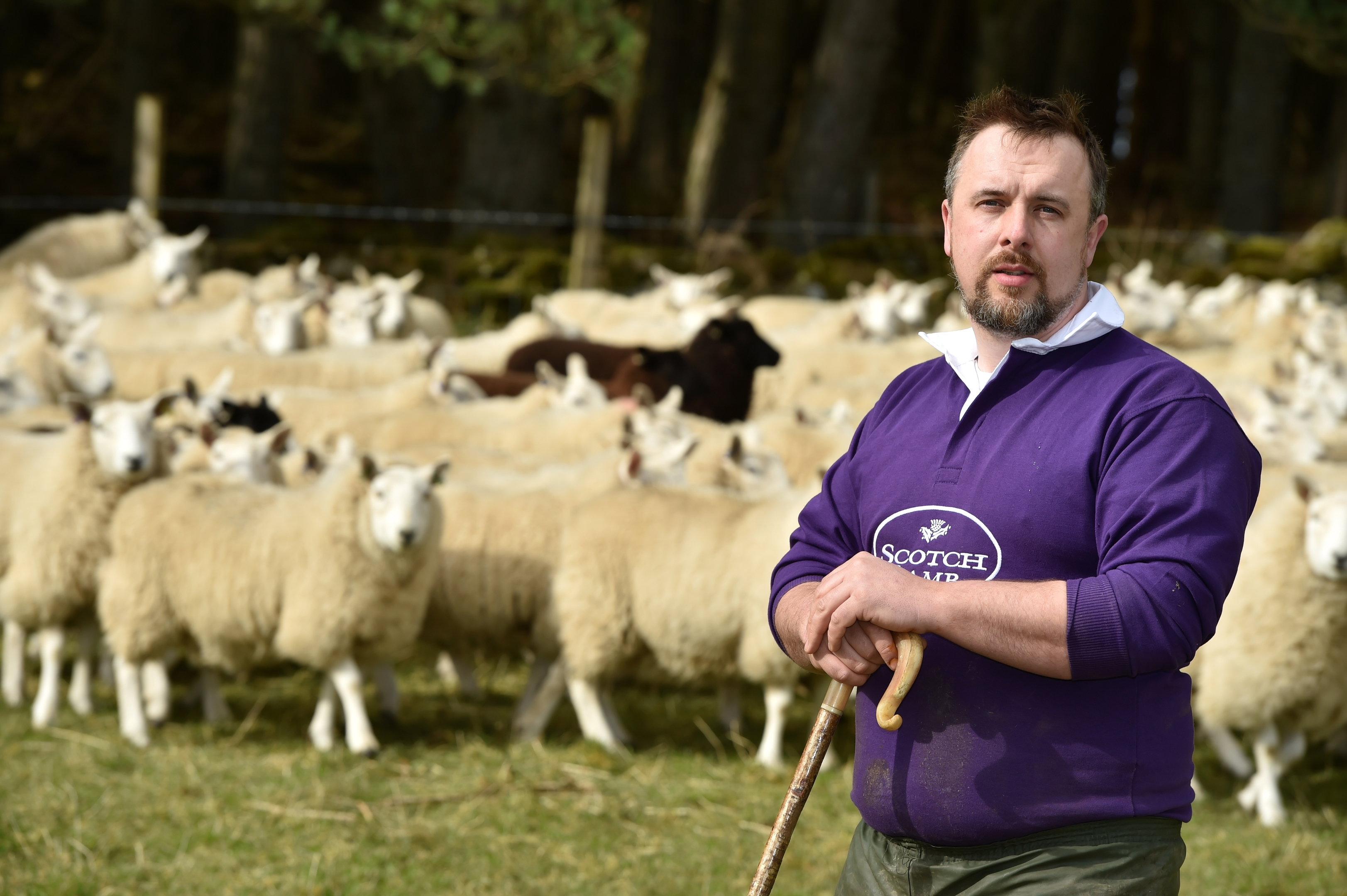 Sheep farmers sasy they are fighting a charity that has huge resources