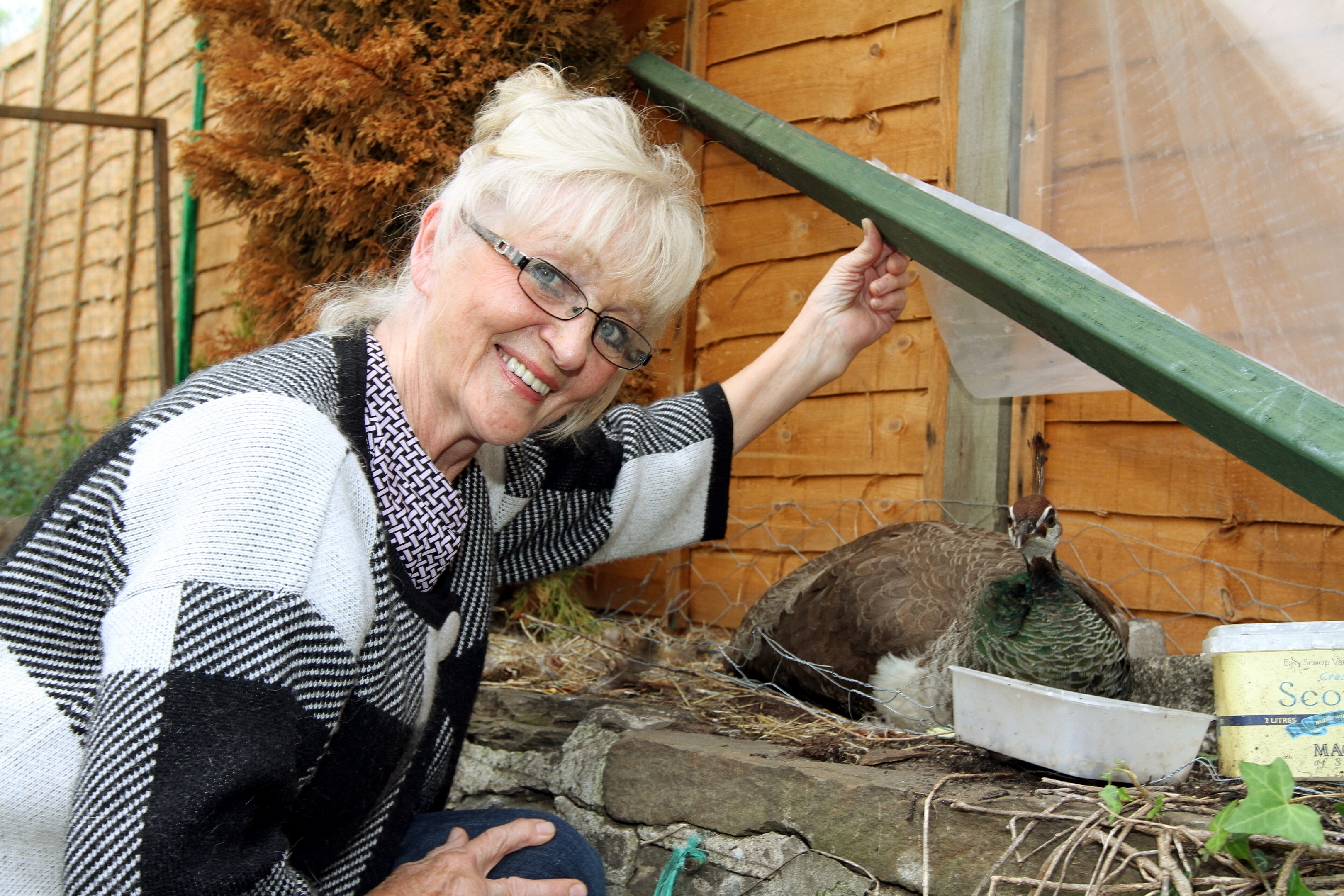 Kate, 71, with Priscilla the peahen, who is pining for Major.