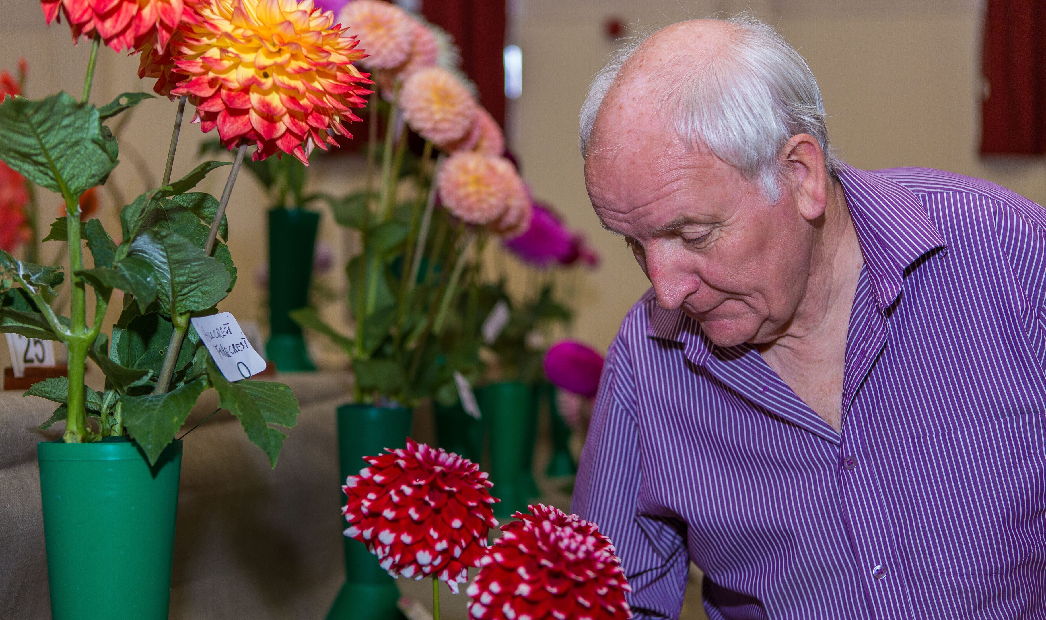 Andrew Kidd from Cupar examines the flowers closely