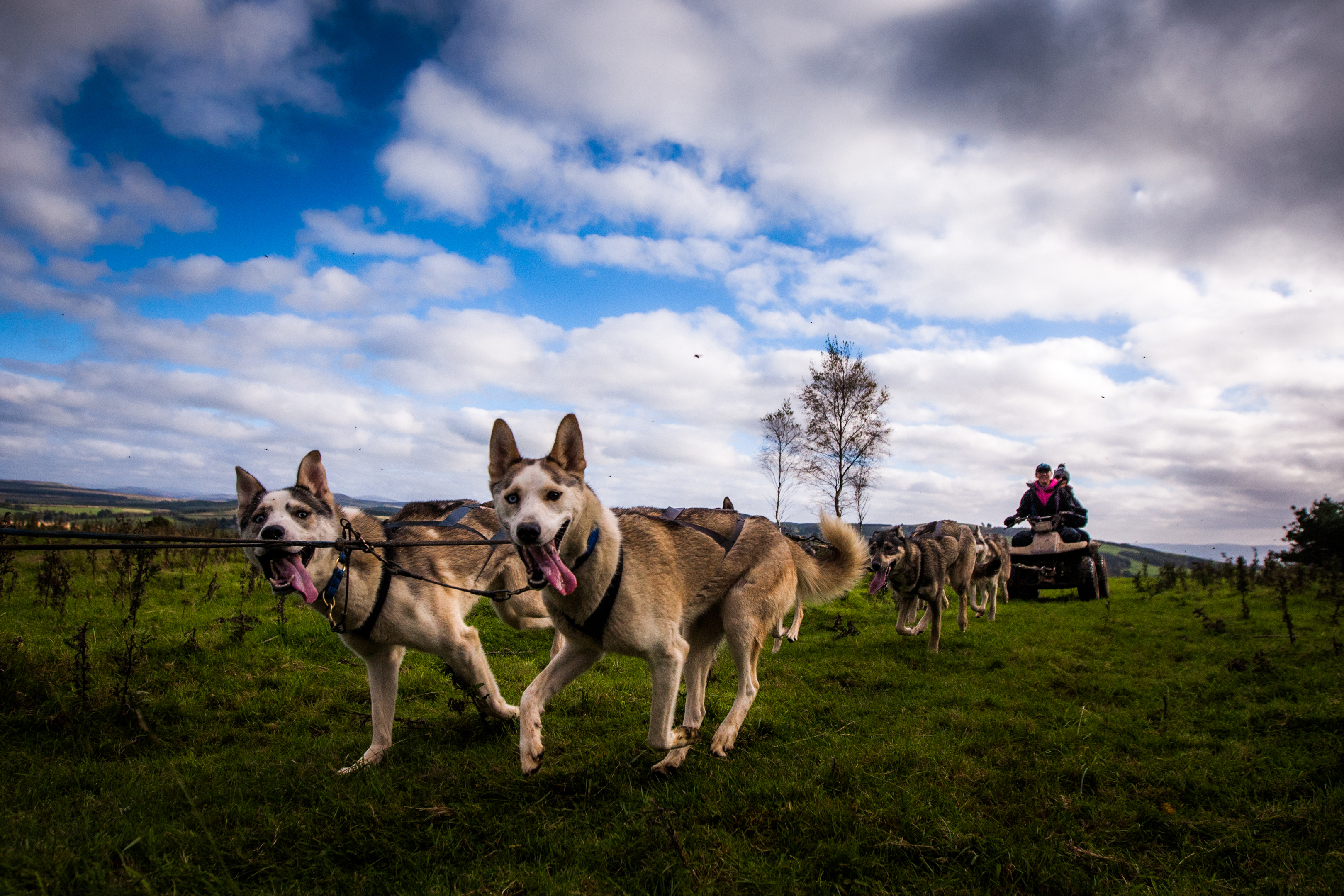 Huskies are demanding working dogs but Game of Thrones has made them in demand pets - sadly often by owners who then abandon them.