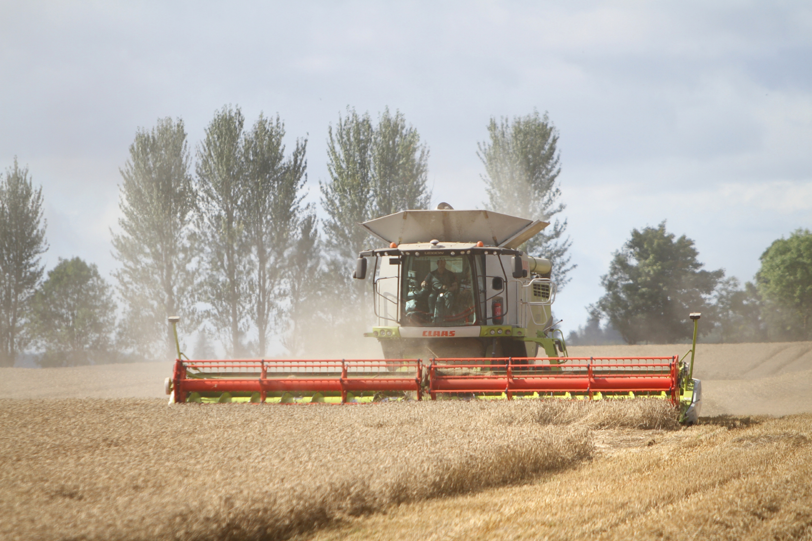Harvesting wheat in fields at Drumgley in Angus.