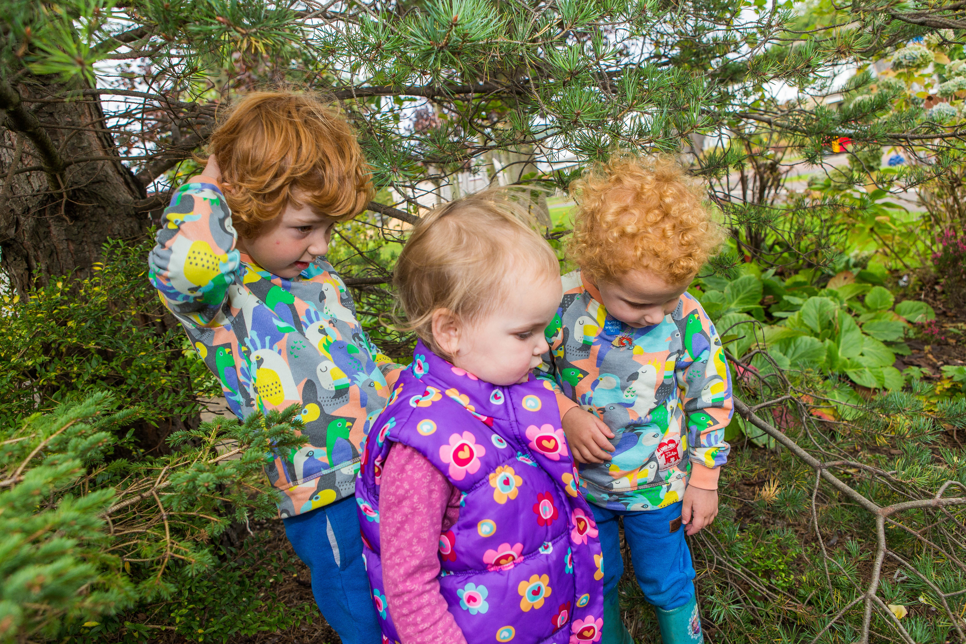 Jamie Allan (5), Robbie Allan (3) and Sabiha Ricks (2) explore the trees