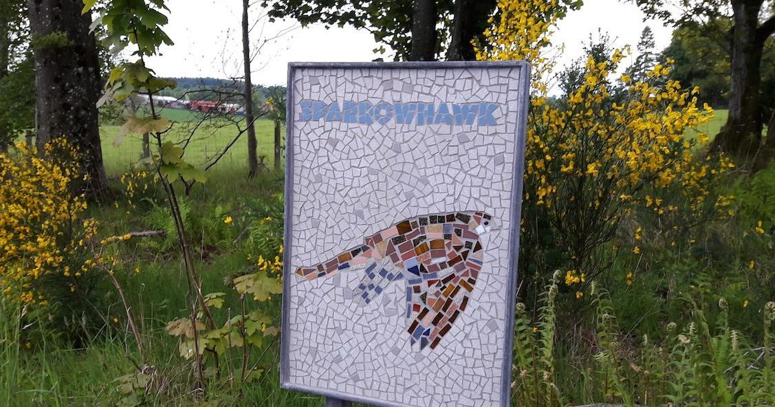 The sparrowhawk mosaic in situ before it was stolen.