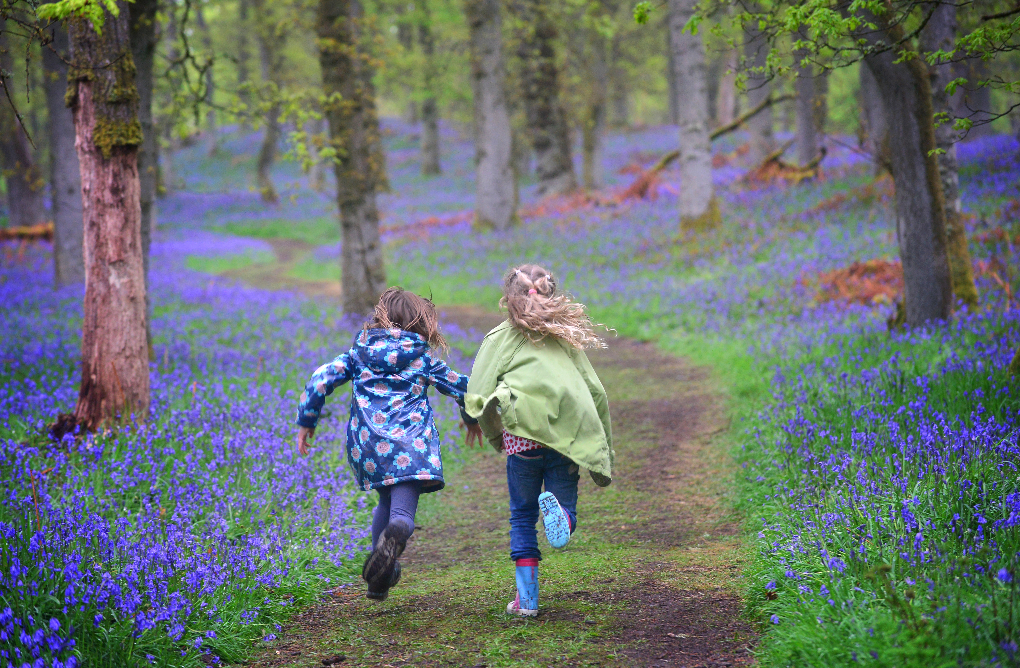 Ballathie Bluebell Wood. The Woodland Trust Scotland believes £200,000 is needed to help keep it safe: Picture courtesy of Julie Howden/WTML.