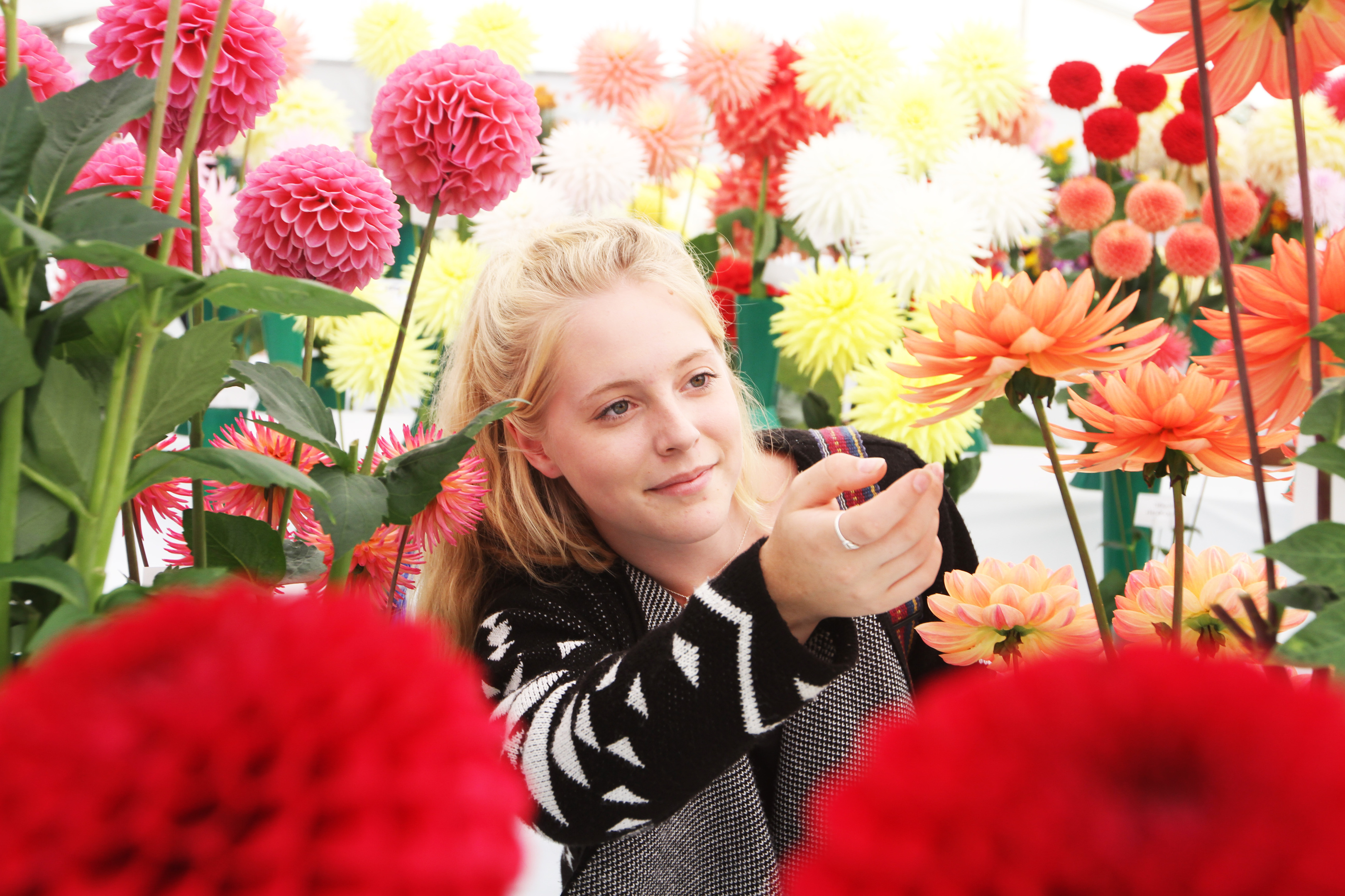 Fiona Hearn, 18, looks at the dahlias at the Flower and Food Festival.
