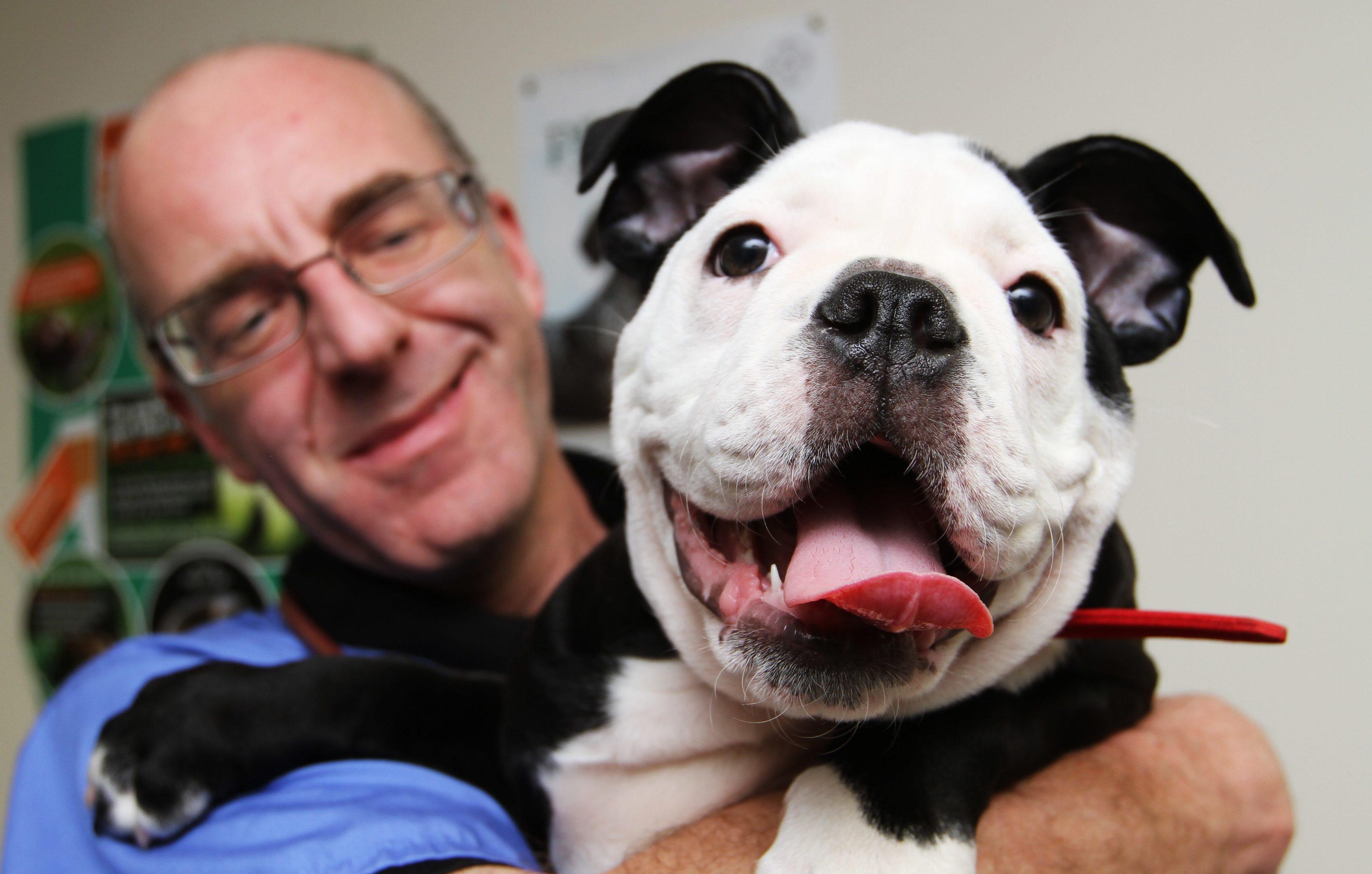 Veterinary surgeon Alan Hill with bulldog Bella.