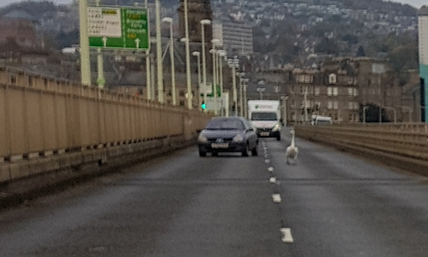 A driver has to take evasive action to avoid hitting the swan.