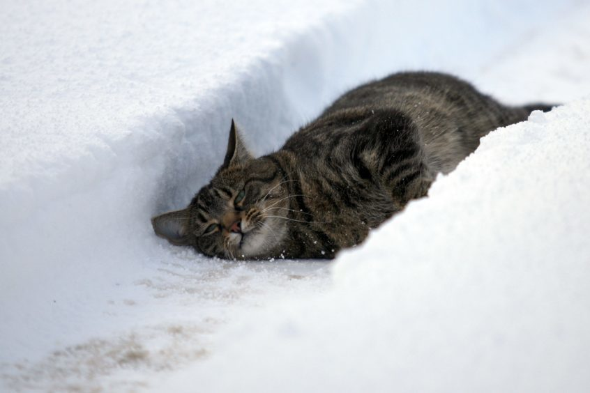 Mookie the cat enjoying the snow during the 201-11 winter.