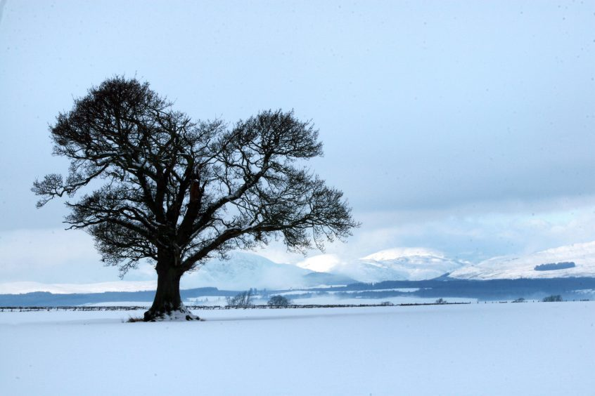 A large tree in a snow covered field with mountains in distance.
