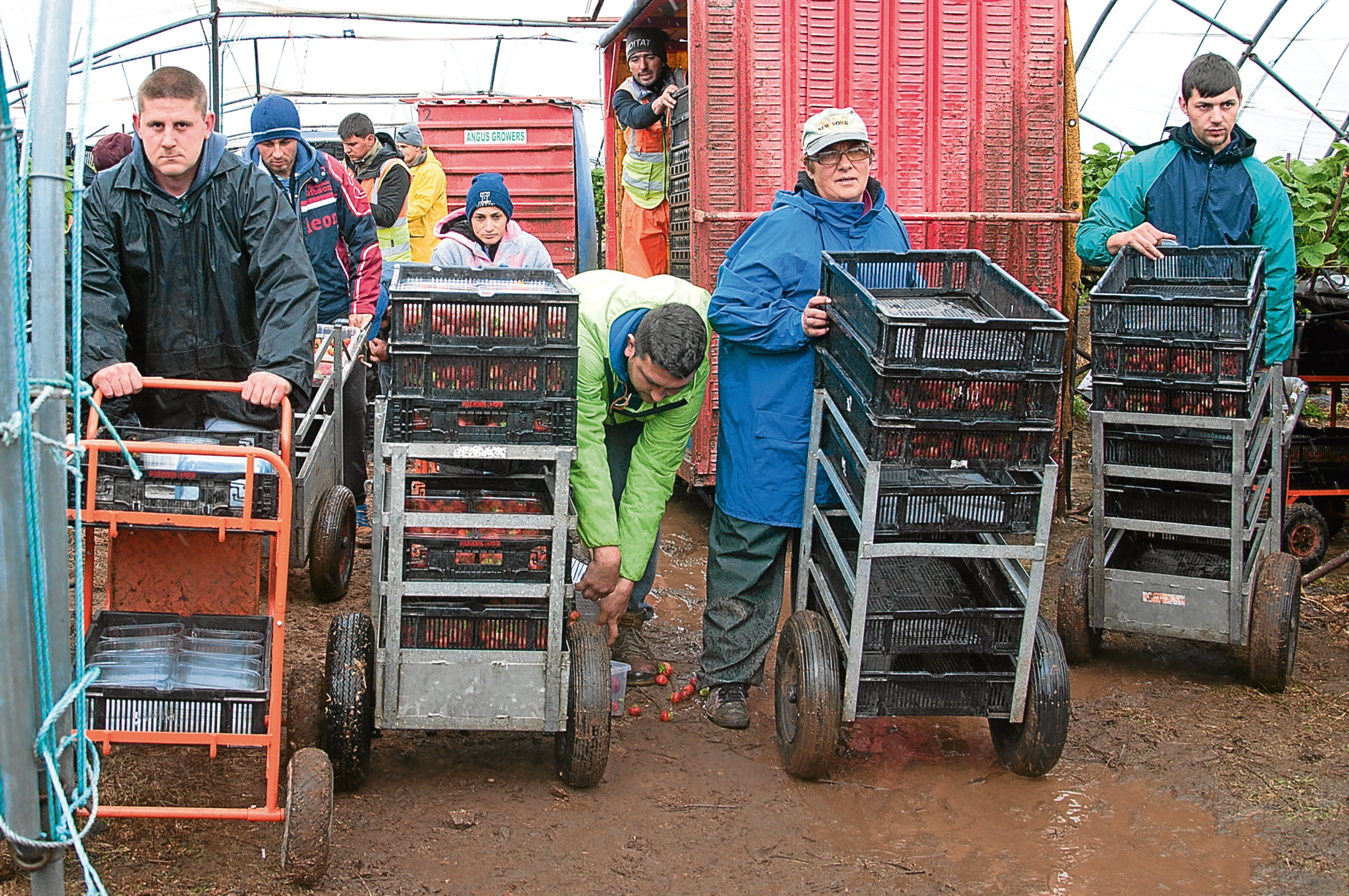 Workers at a soft fruit farm in Angus.