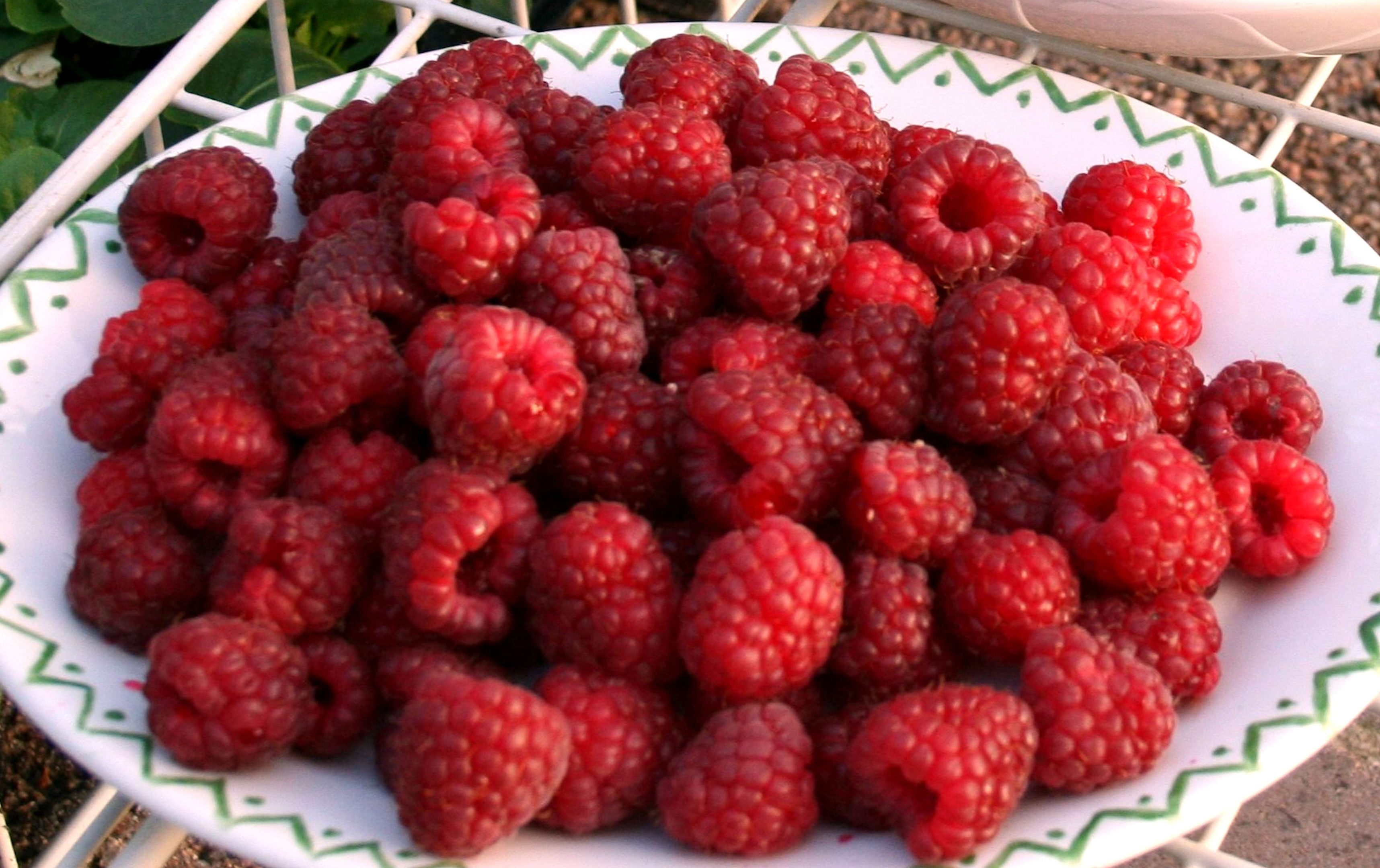 Autumn Bliss raspberries picked in October