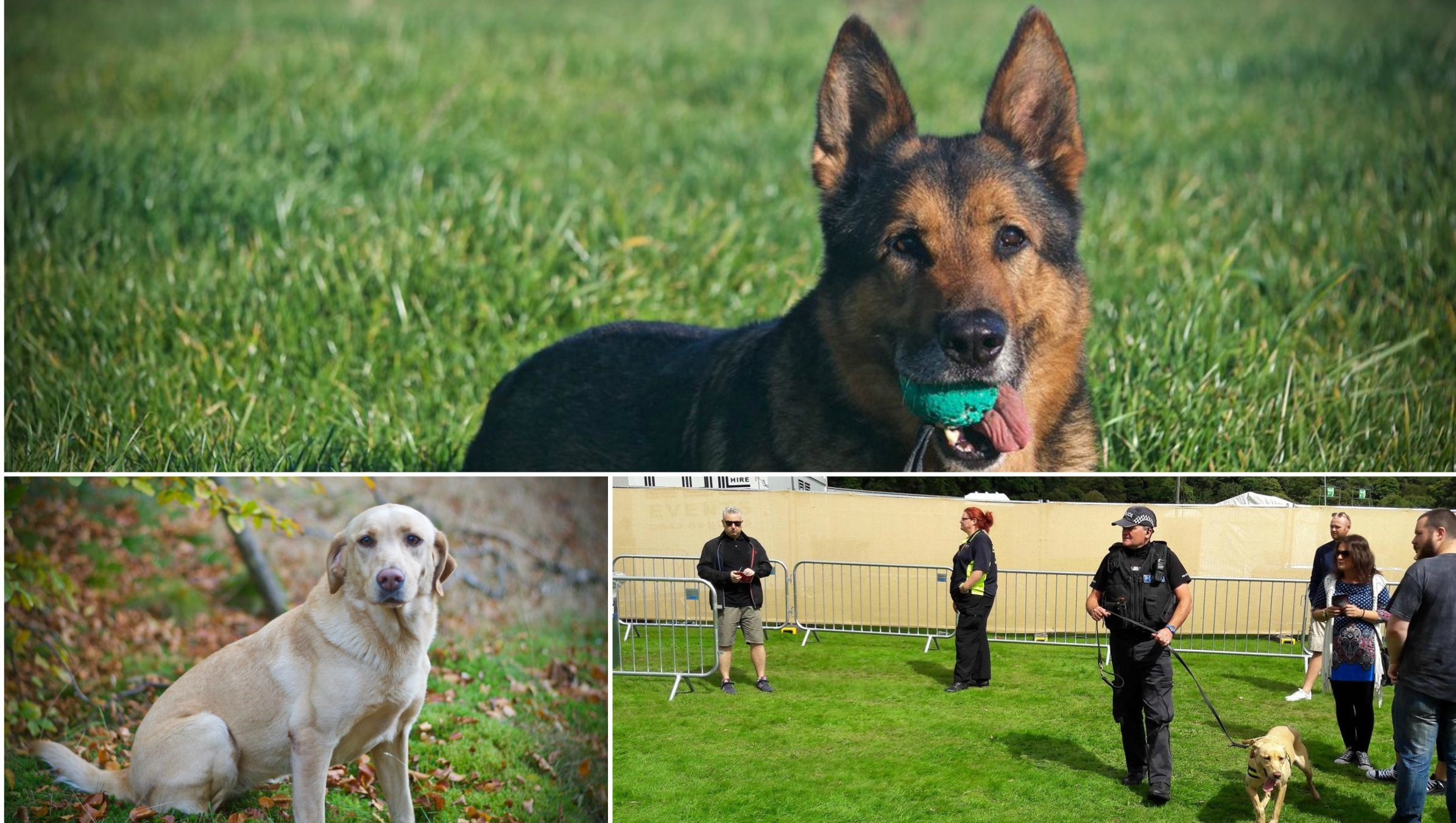 Police dogs Rex and Dee, and PC Mike Keenan.