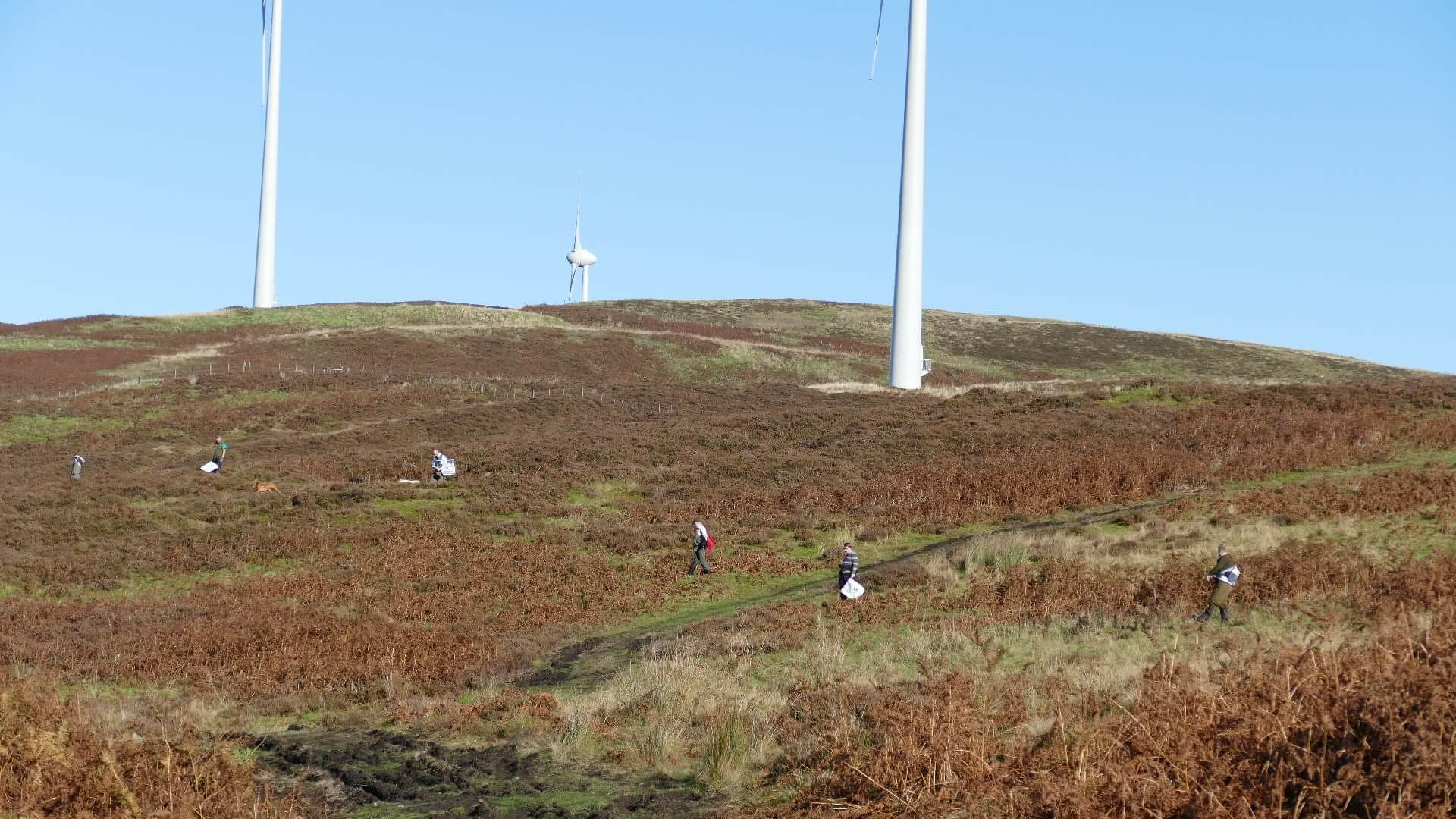 Beaters lined out below turbines on moorland in Scotland. Land uses, side by side like this, are increasingly commonplace today in Scotland.