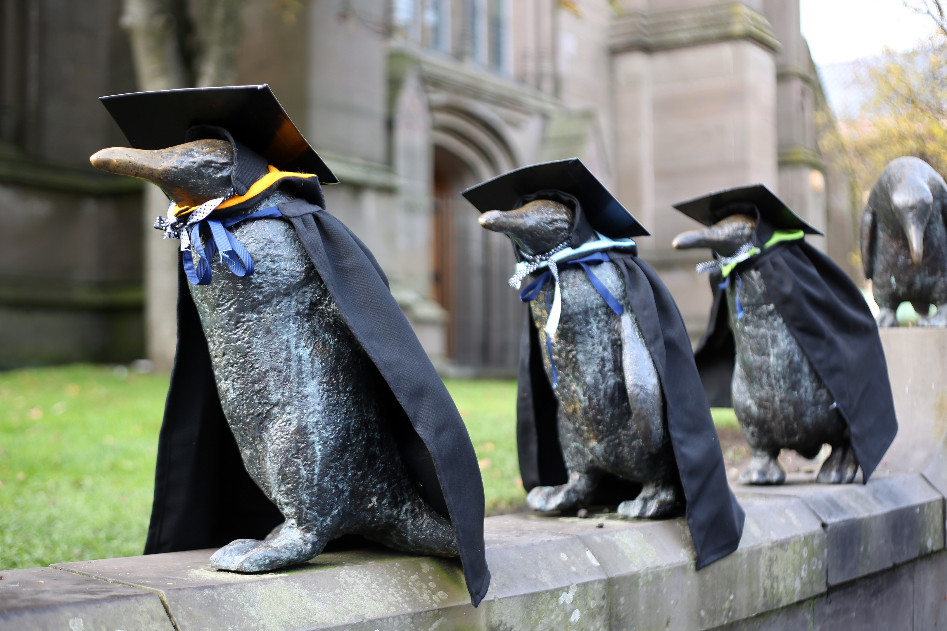 Dundee's penguins mark the arrival of winter graduation season in 2017