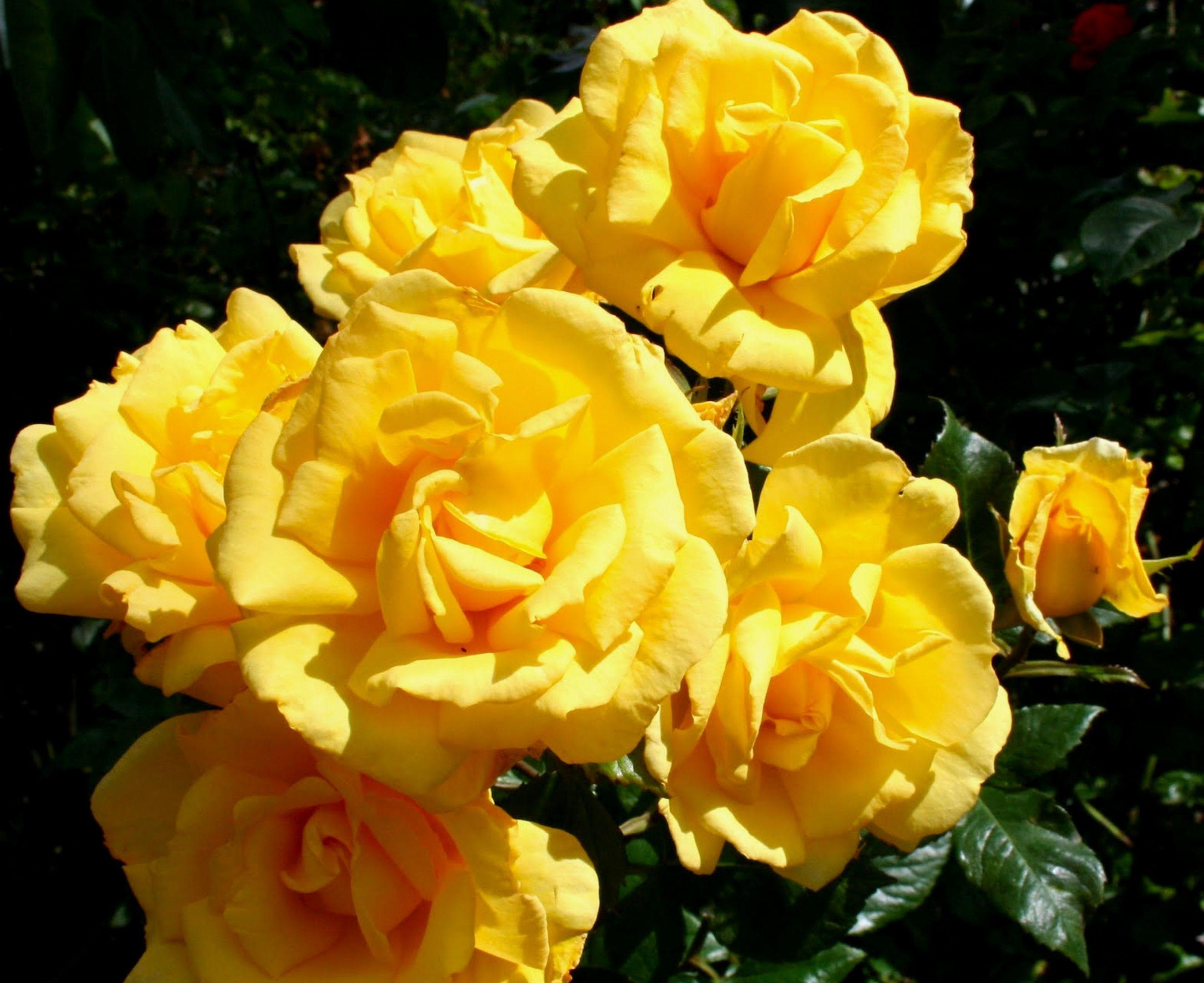 Rose Julie Goodyear
